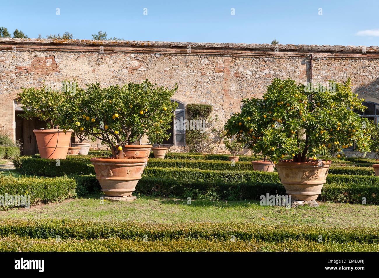 Vicobello, Siena, Tuscany, Italy. The formal Italian garden with clipped box hedges and pots of lemon trees outside - Stock Image