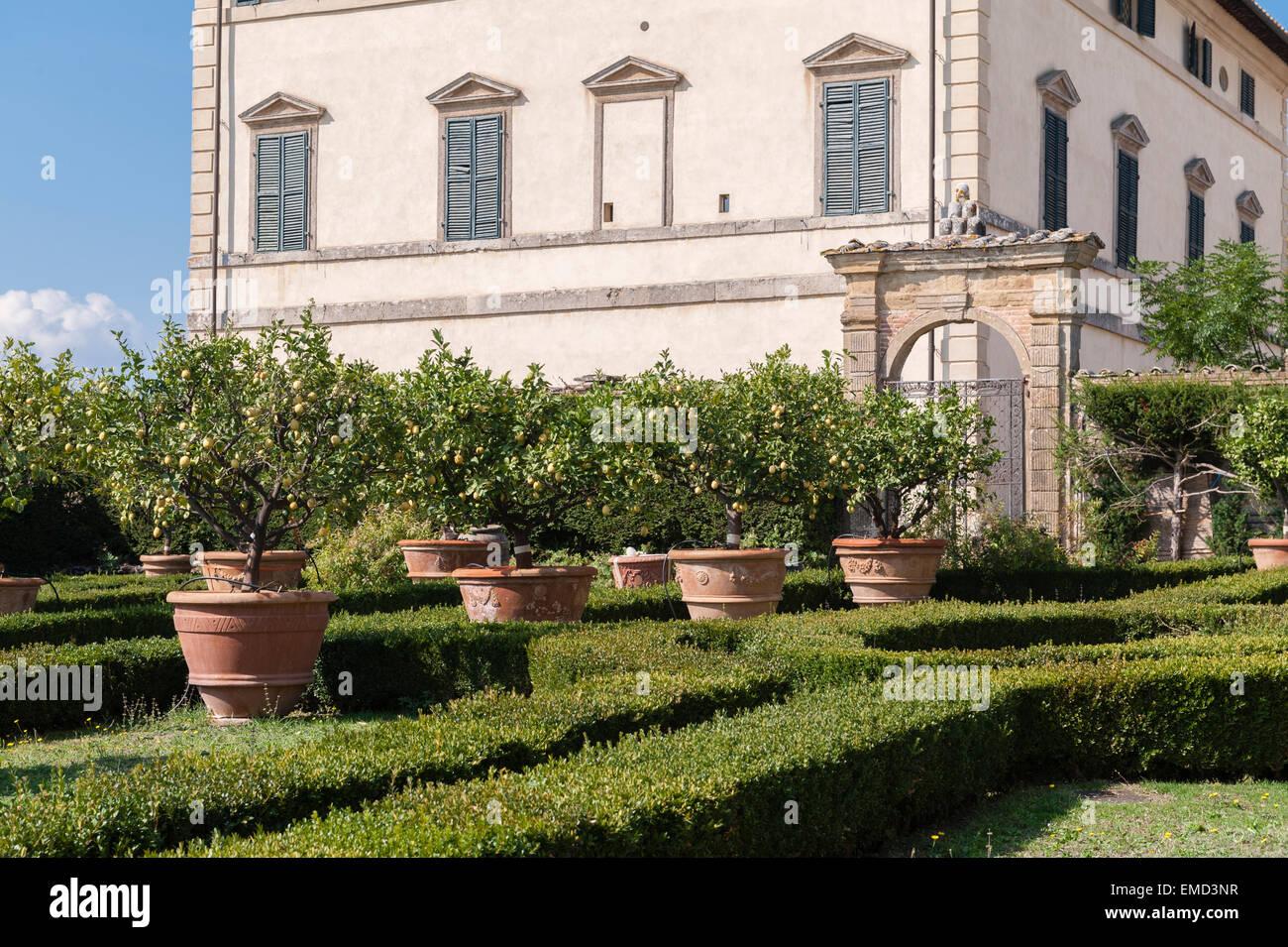 Vicobello, Siena, Tuscany, Italy. The formal Italian garden with clipped box hedges and terracotta pots of lemon Stock Photo
