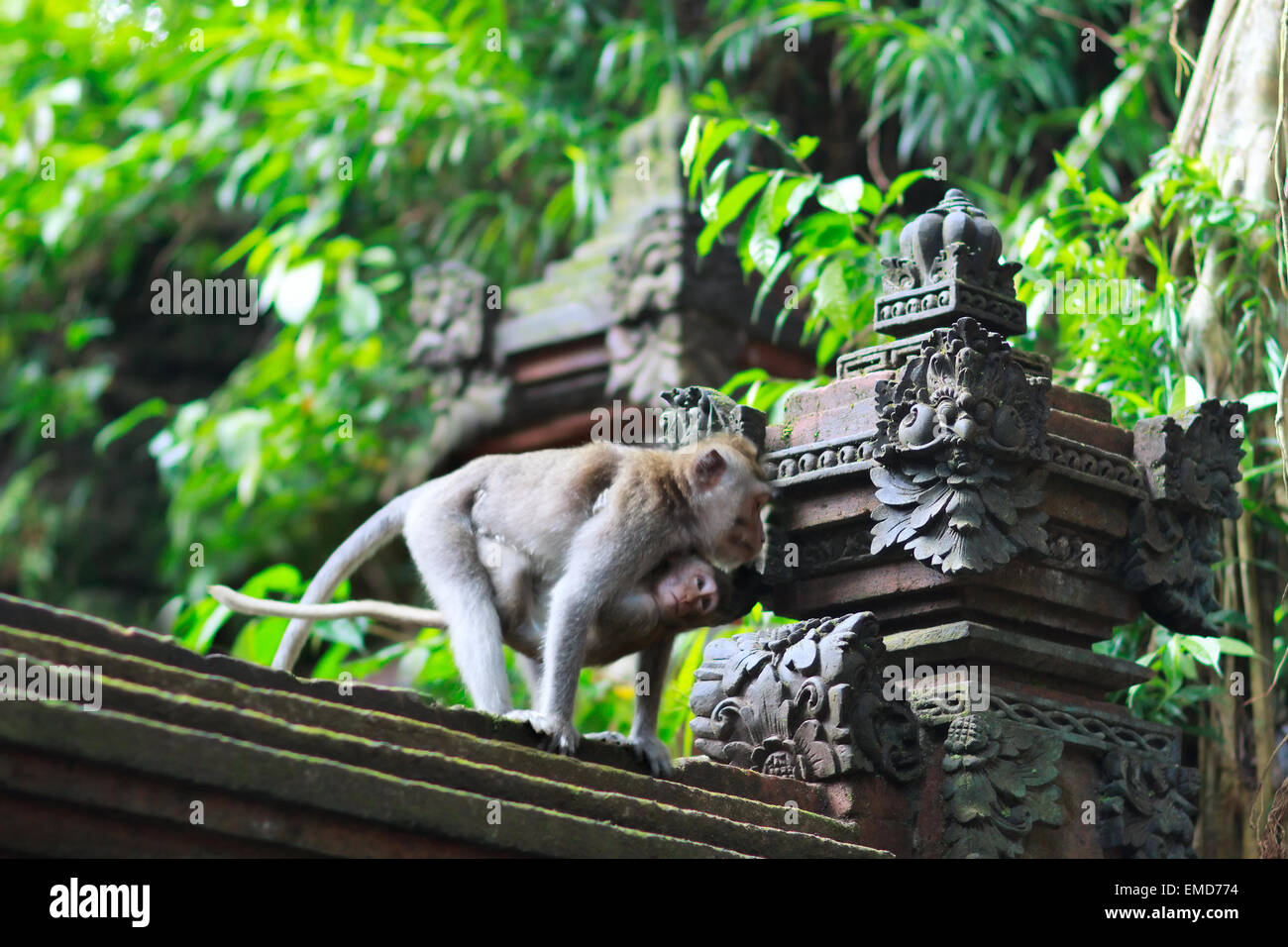 Details of temple in Ubud monkey forest - Stock Image