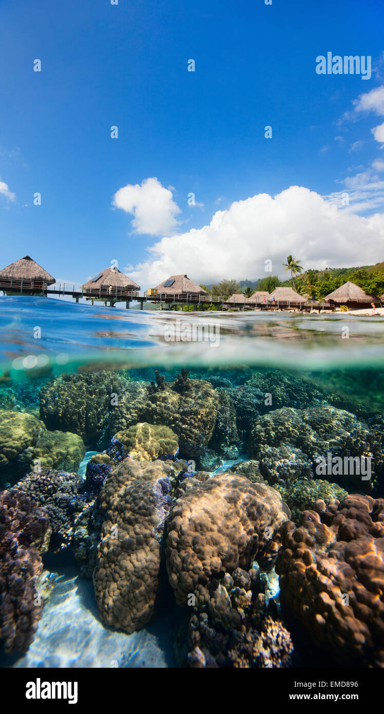 French Polynesia above and bellow water - Stock Image