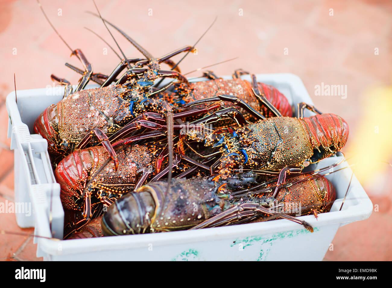 Lobster season - Stock Image