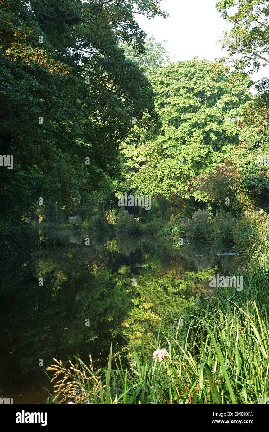 Reflections of late summer trees with different shades of green in the water of the Kennet & Avon Canal on a - Stock Image