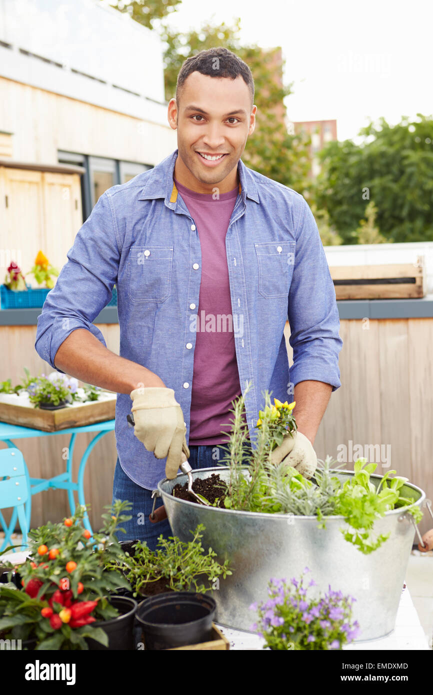 Man Planting Container On Rooftop Garden - Stock Image