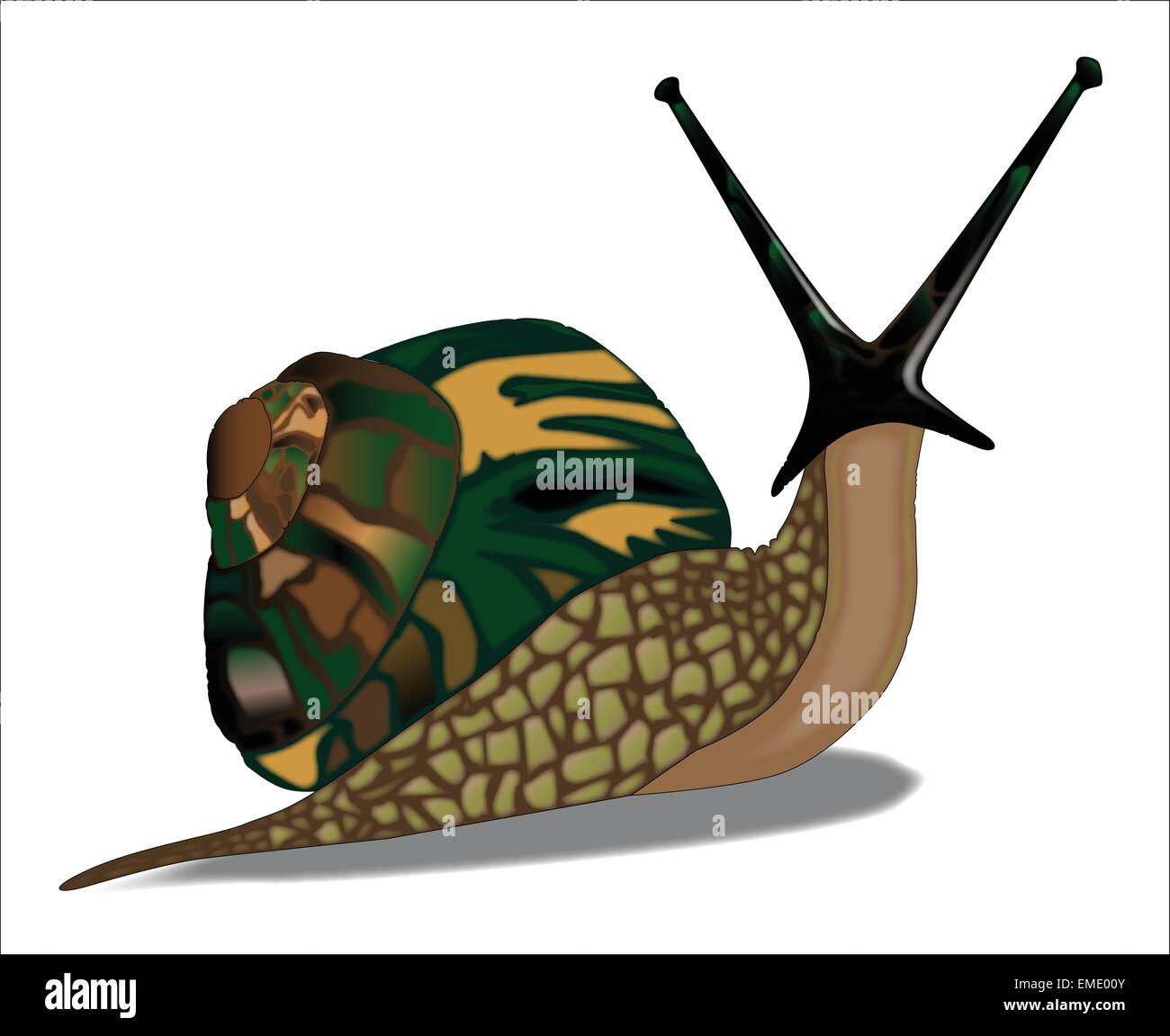 Isolated Snail - Stock Vector