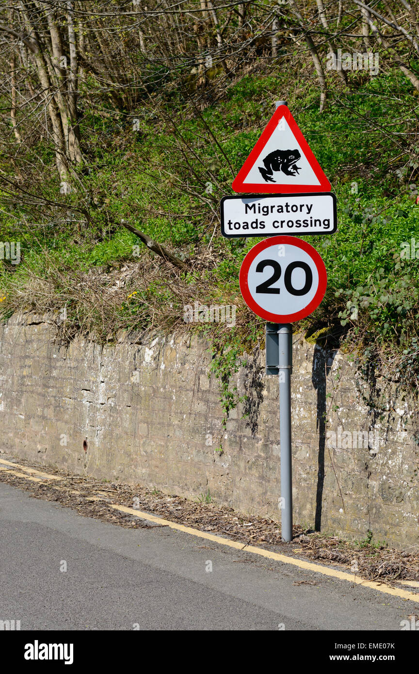 A road sign warns drivers to beware of migratory toads crossing the road. In Shirebrook, Nottinghamshire, England. - Stock Image