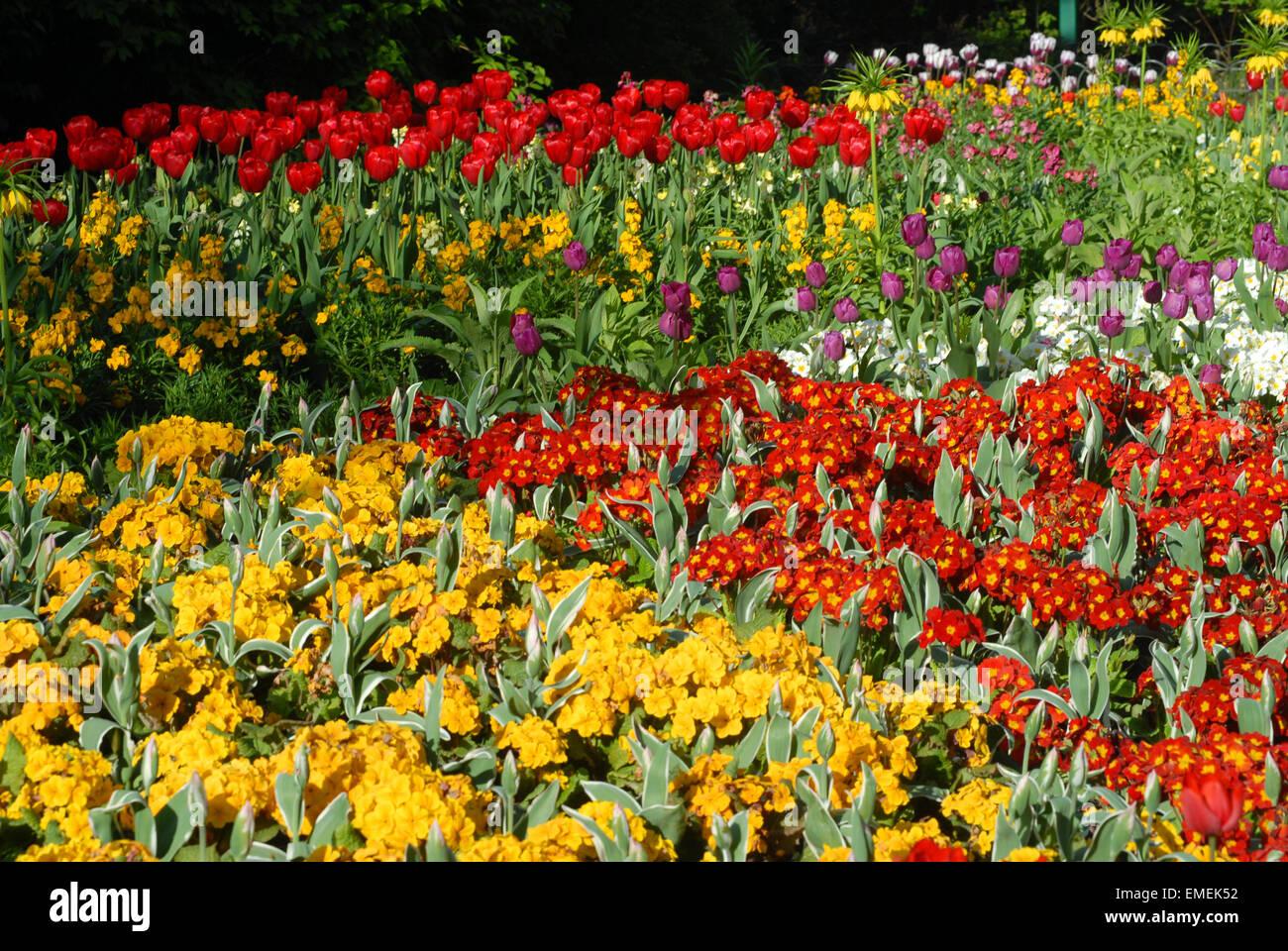 London, UK, 20 April 2015,  Bright April sunshine brings to life the vibrant colours of the flowers on St James Stock Photo