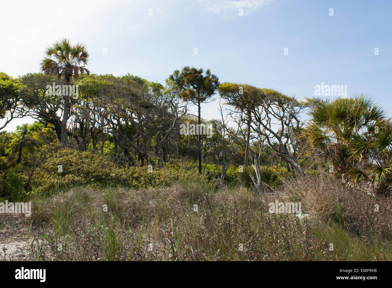 Folly Beach - Stock Image