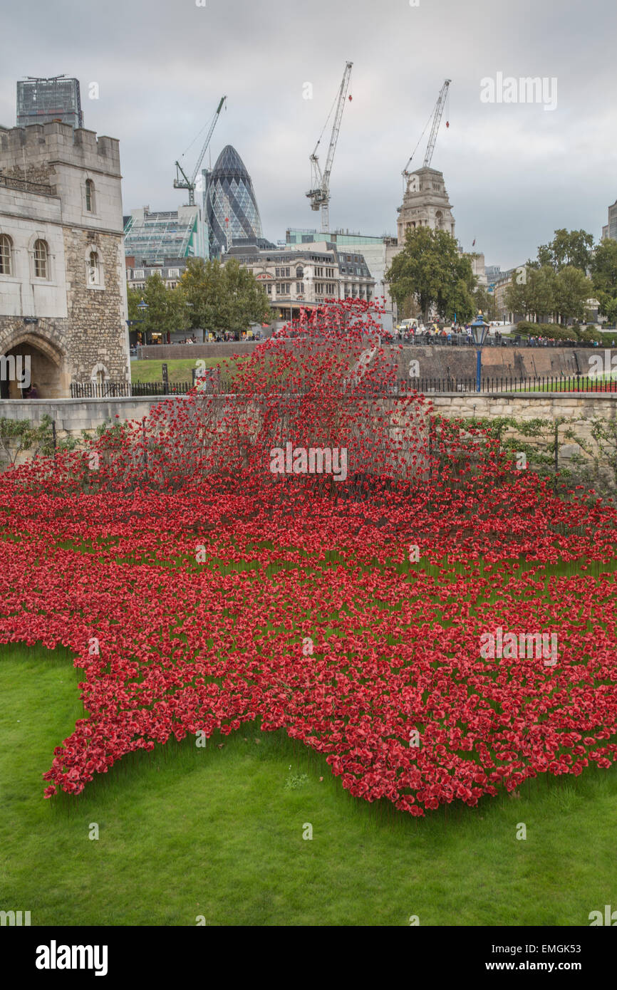 The Blood Swept Lands and Seas of Red evolving art installation at the Tower of London. 888,246 poppies will be - Stock Image