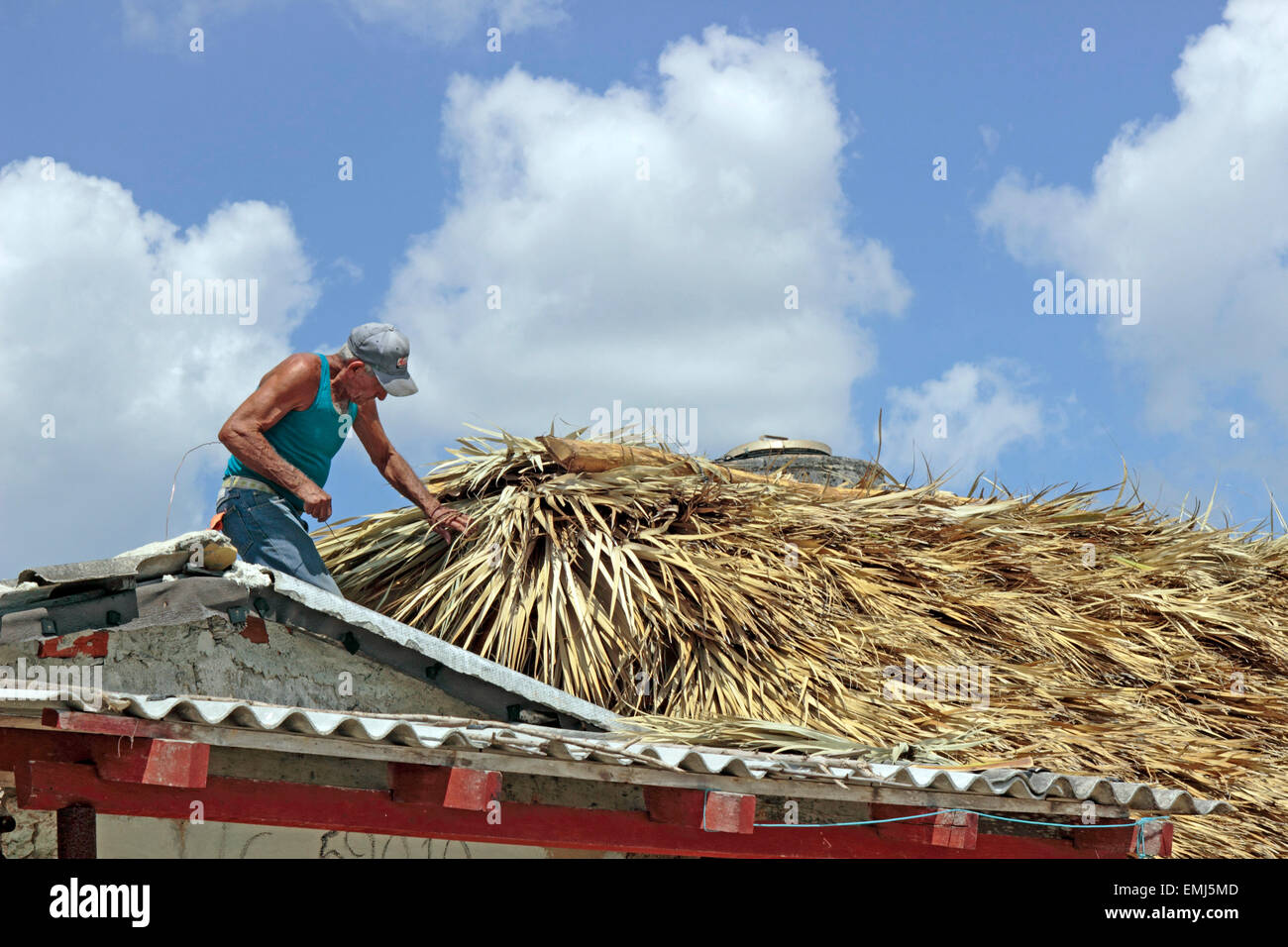 Elderly man works on a straw roof of a Beach house on the beach at Zapata Peninsula Cuba - Stock Image