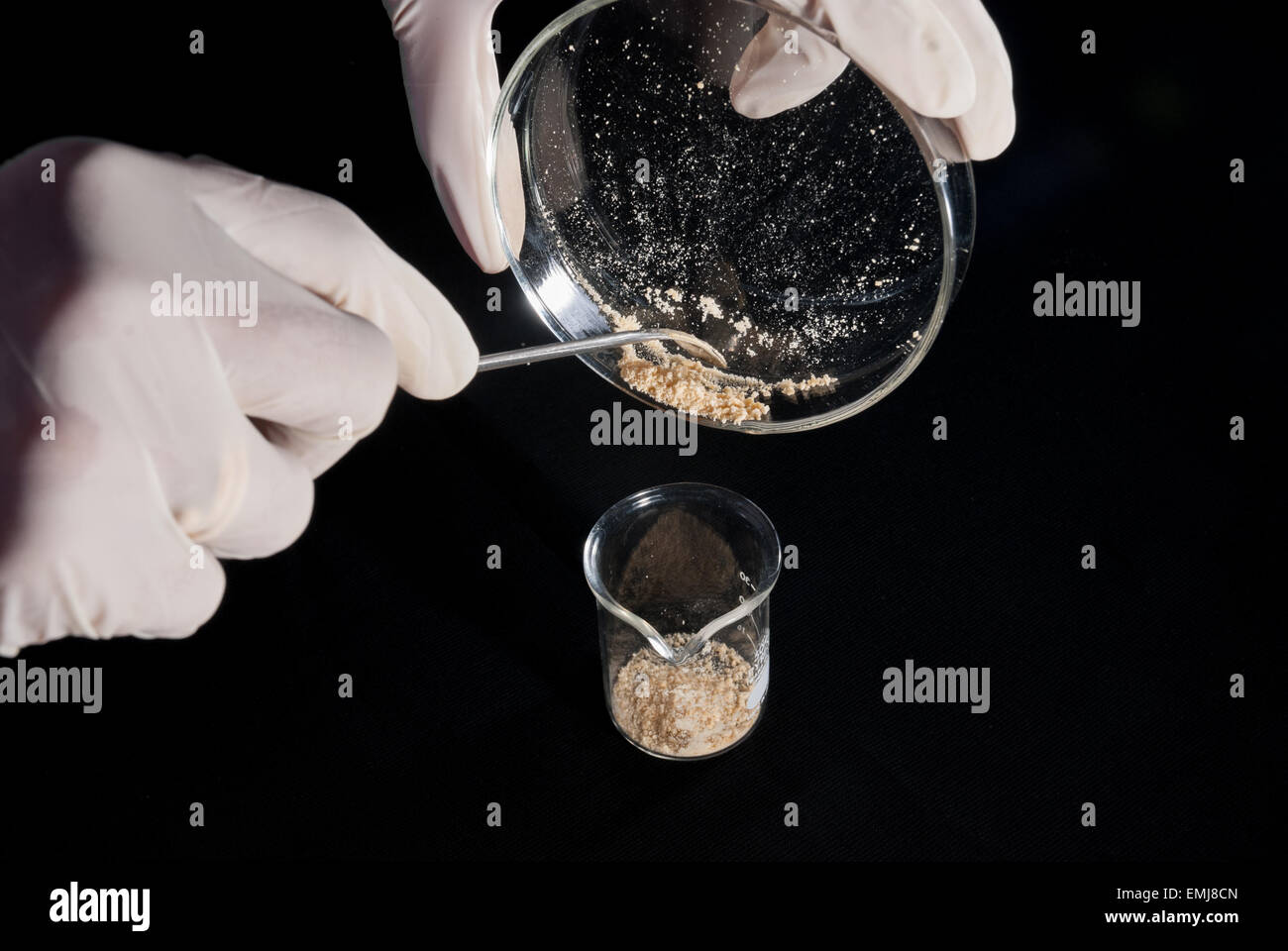 Probiotics made of fermented milk at The Indonesian Institute of Sciences. - Stock Image