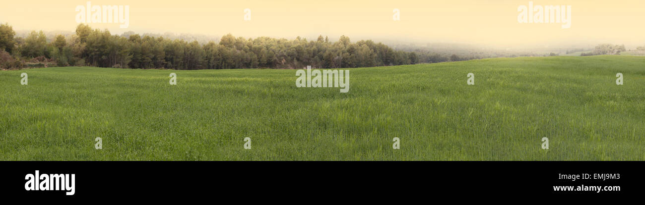 Wheat fields in Conca de Barbera, Catalonia, Spain - Stock Image