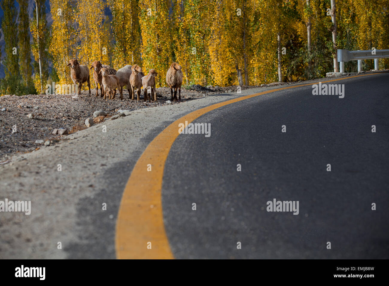 Animals waiting alongside highway - Stock Image