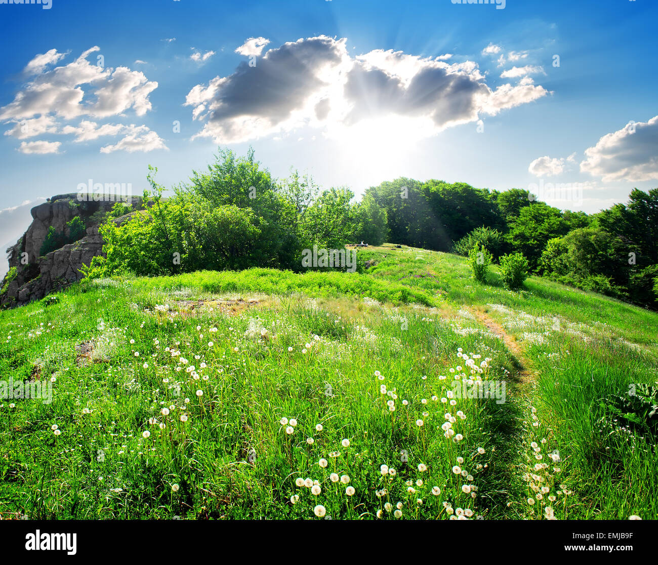 Meadow of dandelions on the top of a mountain - Stock Image