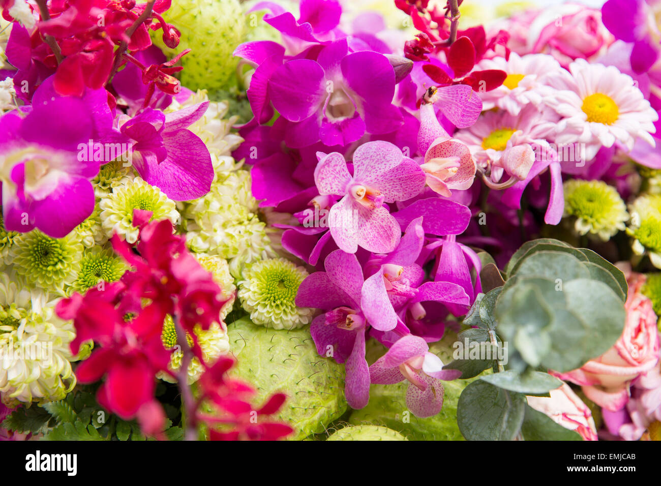 Many different beautiful flowers blossoming stock photos many beautiful flowers decoration stock image izmirmasajfo