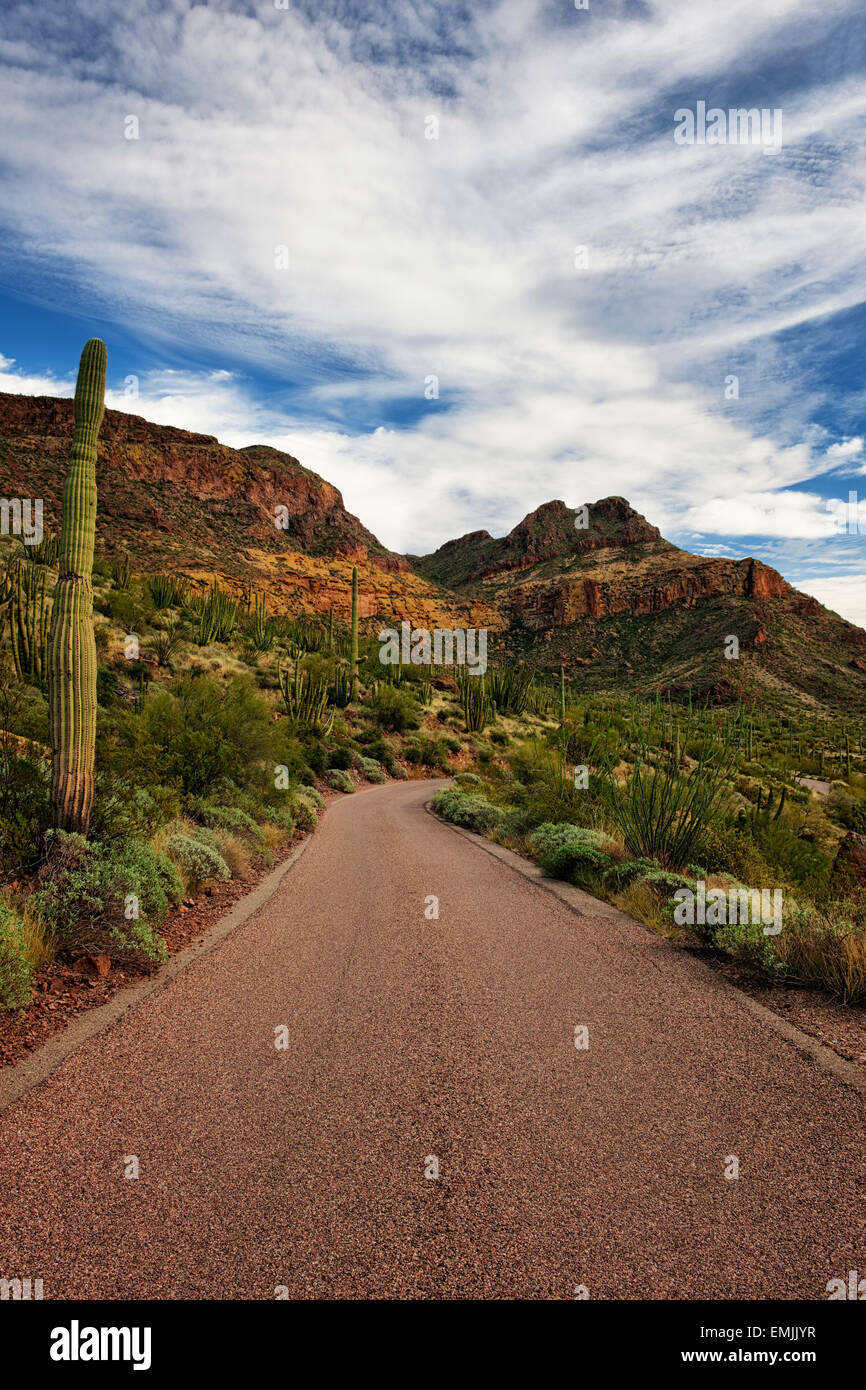 Ajo Mountain Drive passes by the many varieties of cactus in Arizona's Organ Pipe  National Monument and the Sonoran - Stock Image