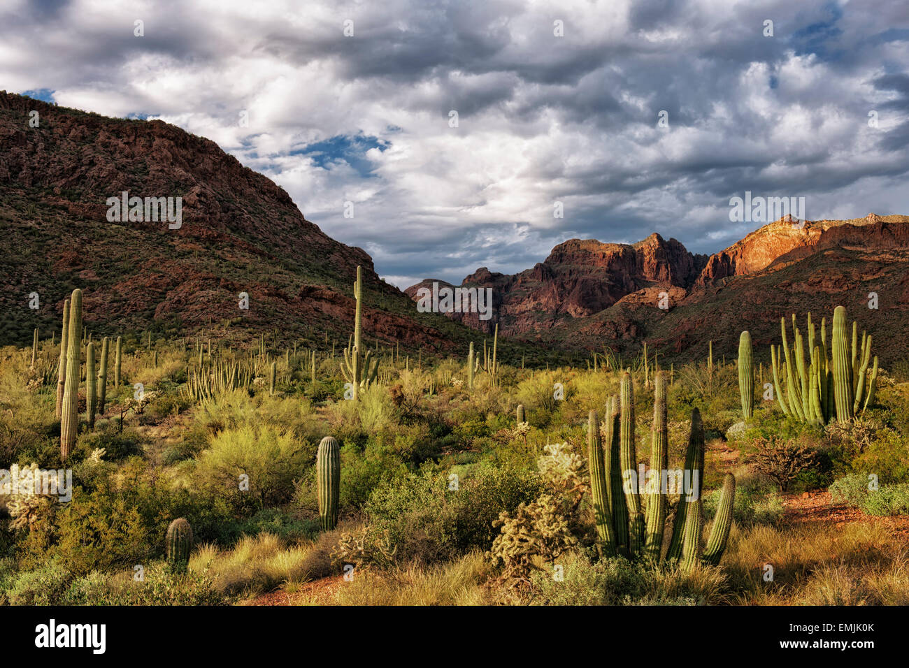 Last light on the Ajo Mountain Range in Arizona's Organ Pipe Cactus National Monument and the Sonoran Desert. - Stock Image