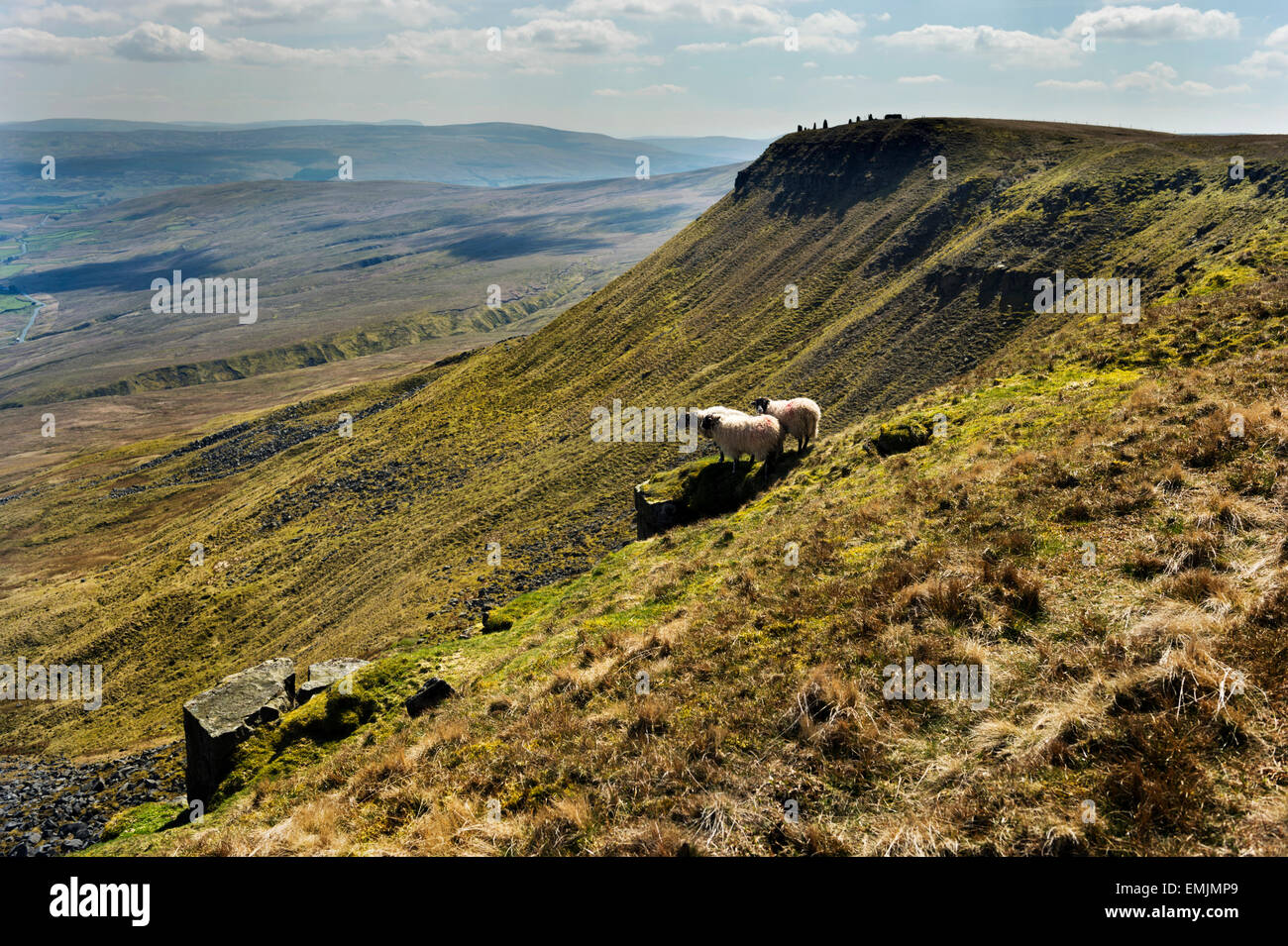 Wild Boar Fell, near Kirkby Stephen, Eden Valley, Cumbria, UK, with grazing sheep. A popular destination for walkers. - Stock Image