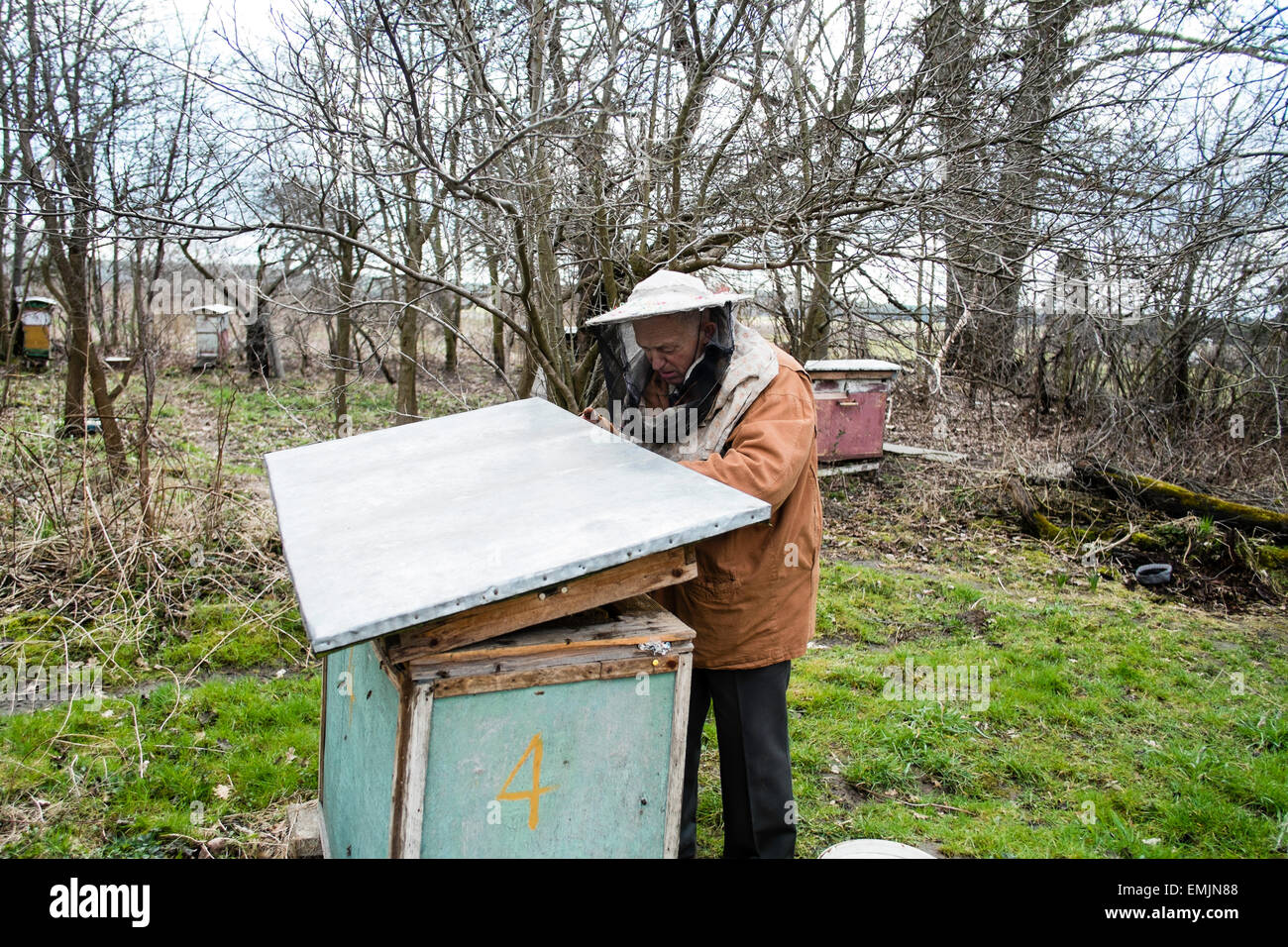 Rural apiary, Osiny, Poland - Stock Image
