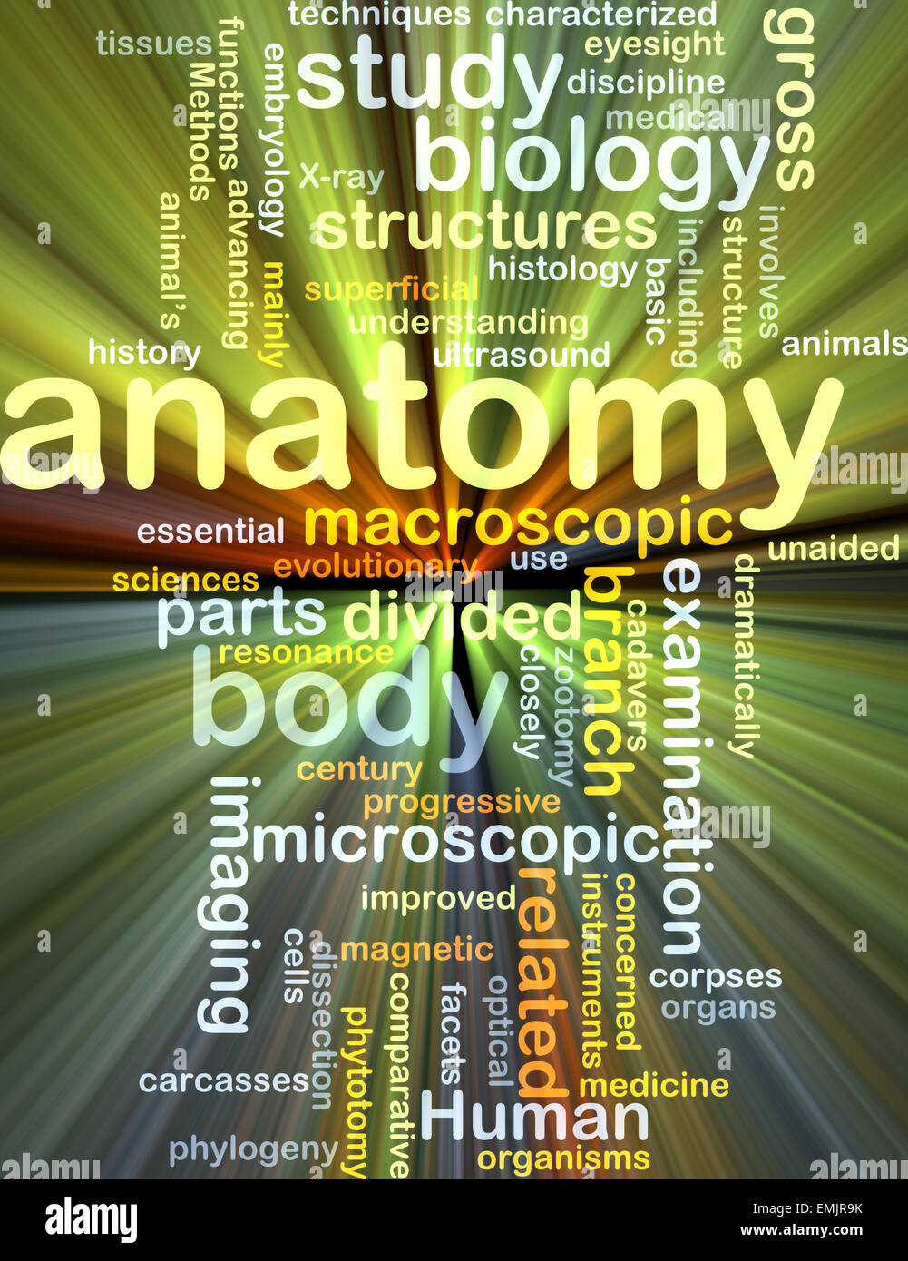 Anatomy Word Cloud Concept Stock Photos Anatomy Word Cloud Concept