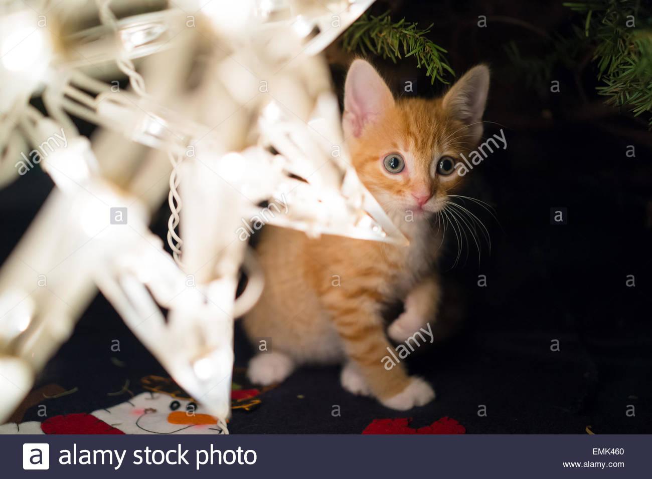 Cat under christmas tree - Stock Image