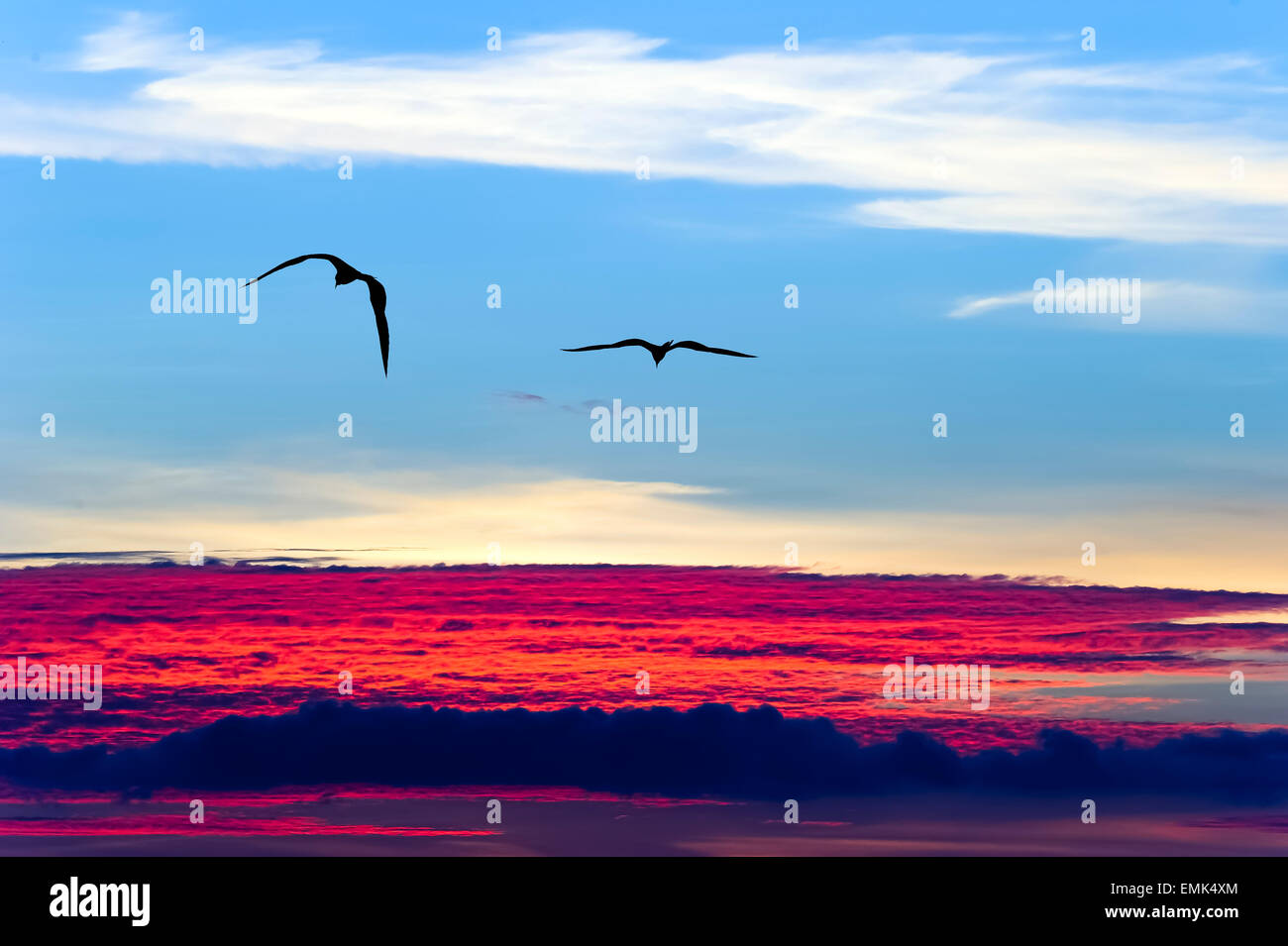 Two birds soar above the clouds against a blue sky and red and white clouds. Stock Photo