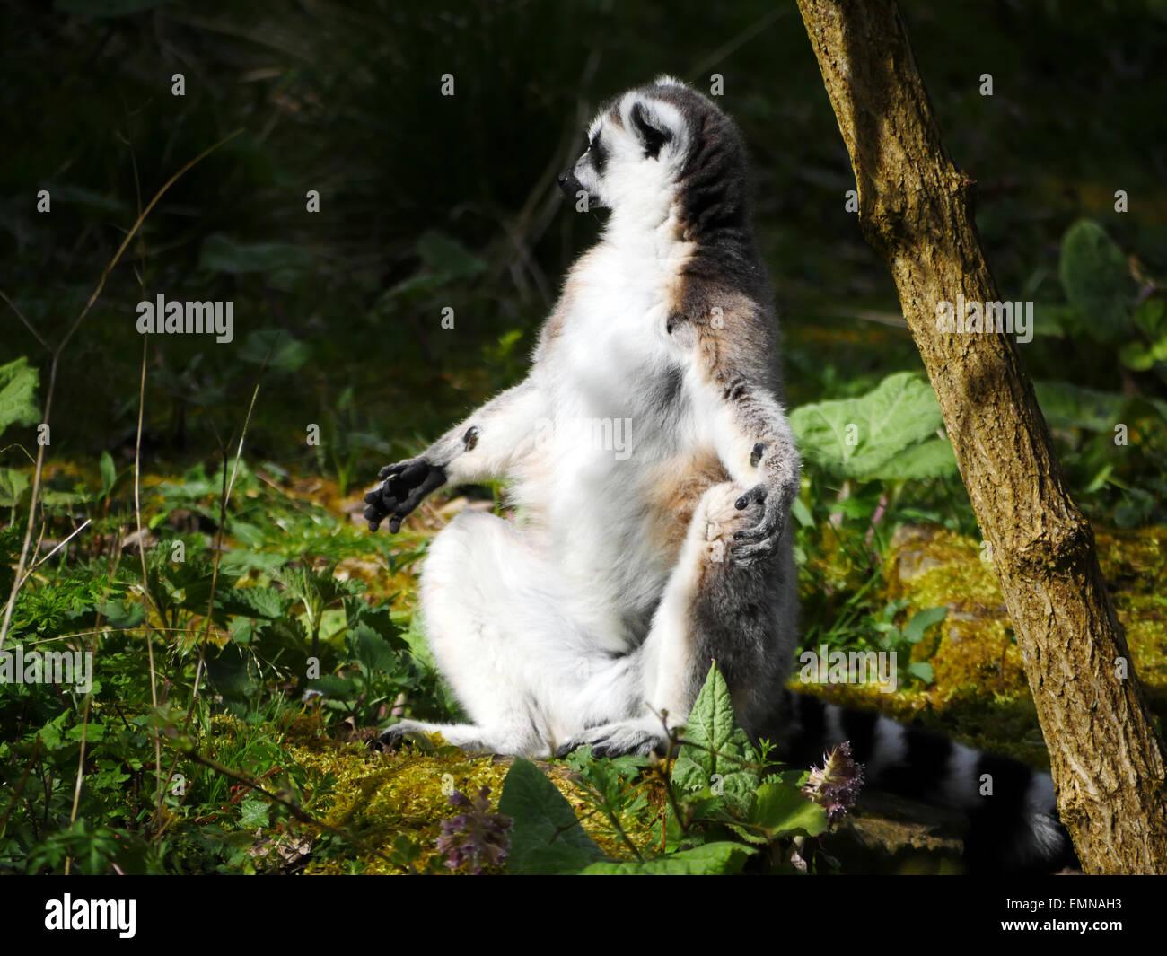 Bathing Ring Stock Photos & Bathing Ring Stock Images - Alamy