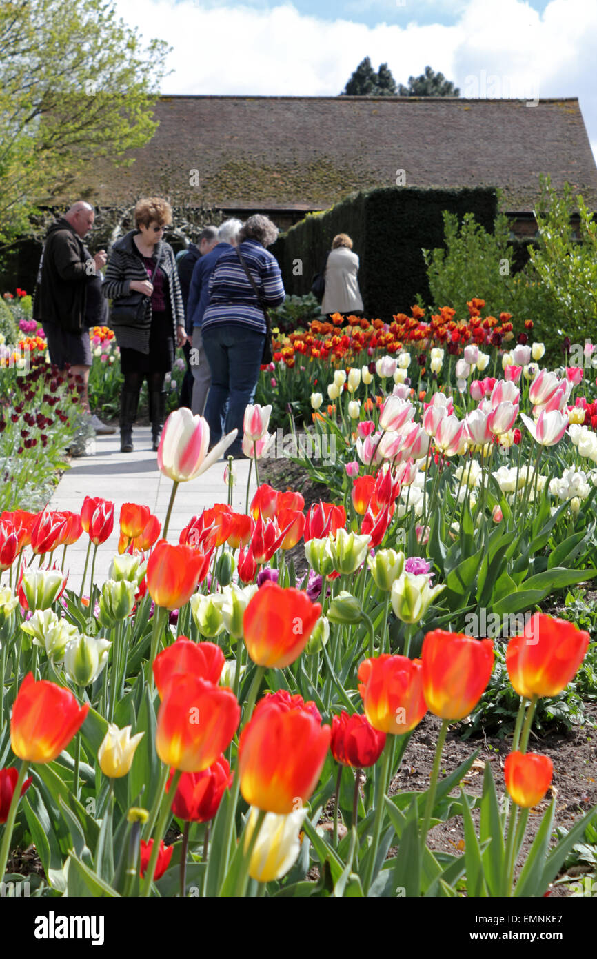Wisley Gardens, Surrey, England, UK. 22nd April 2015. The stunning display of over 350 varieties of tulips which Stock Photo