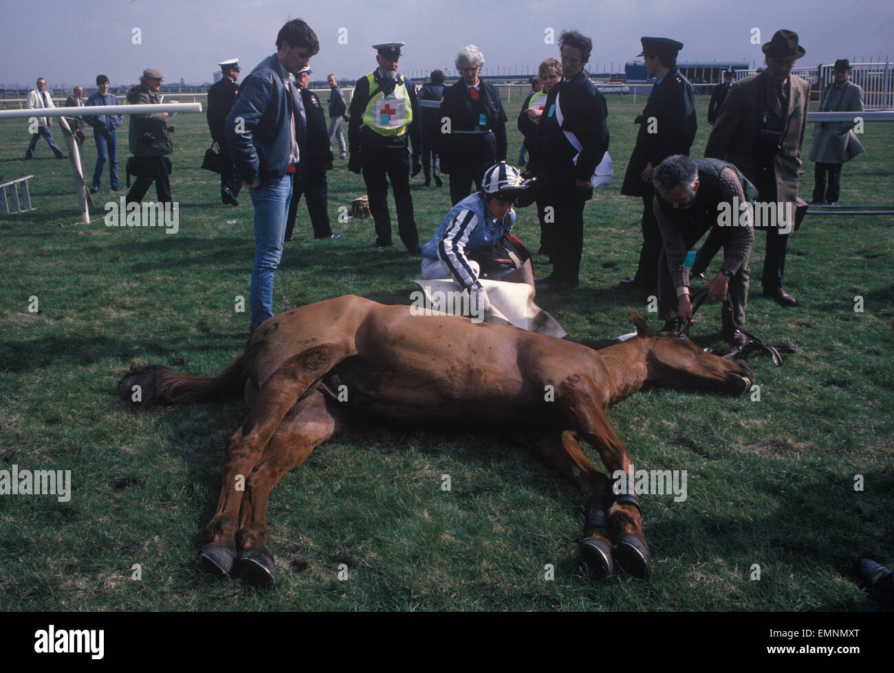 Dead race horse at the Grand National course, Aintree Had to be shot because of a bad fall. 1980s UK.  HOMER SYKES Stock Photo