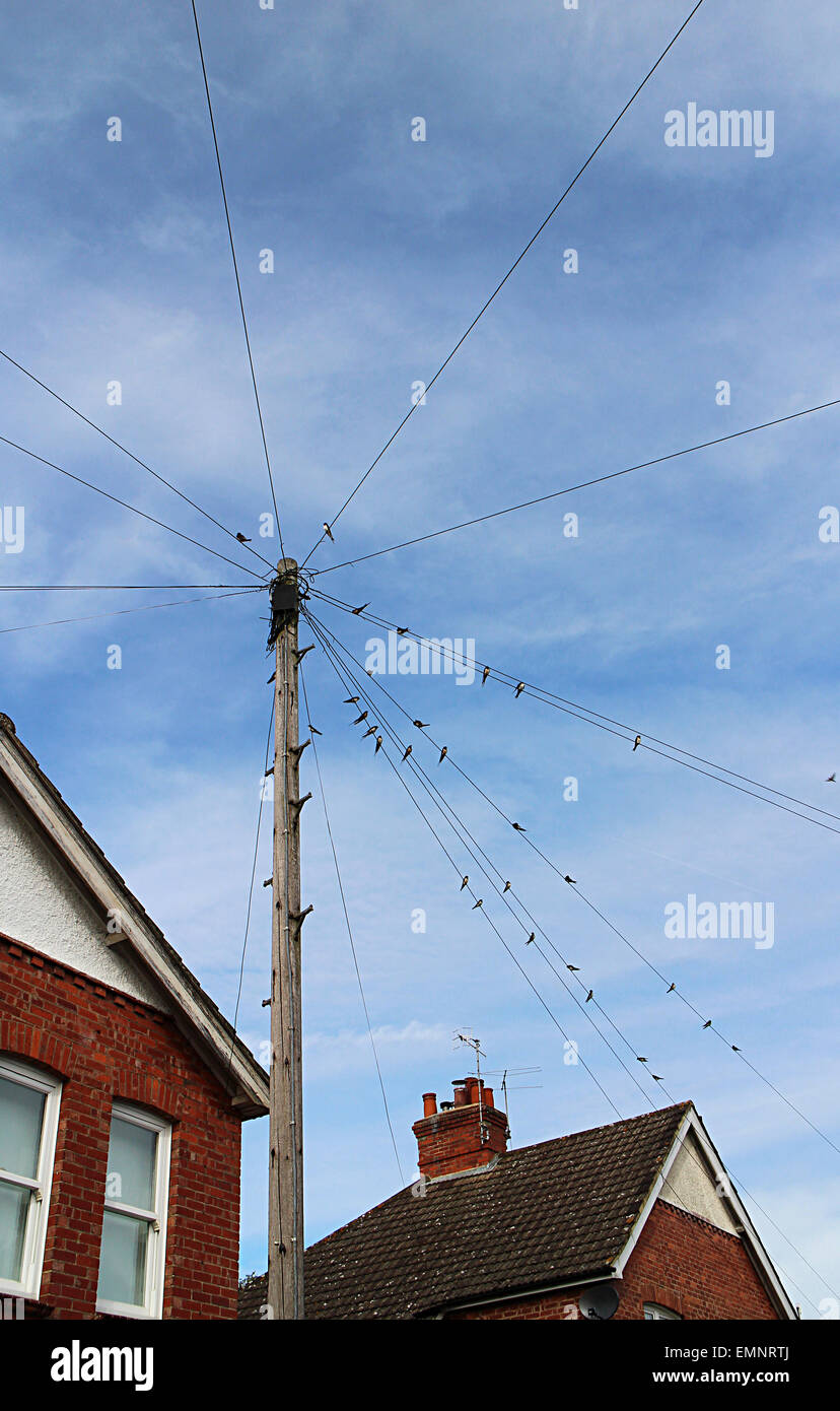 Swallows On Telephone Wires Stock Photos Wiring A House In South Africa Gathered Late August Readiness To Migrate From England Southern