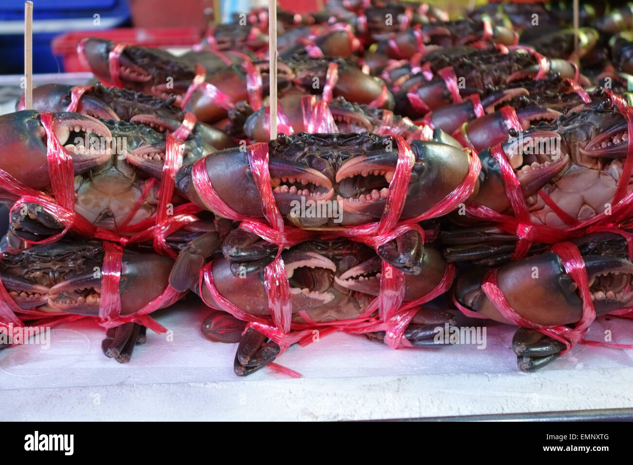Bound tied live crabs on a stall in a Bangkok food market, Thailand - Stock Image