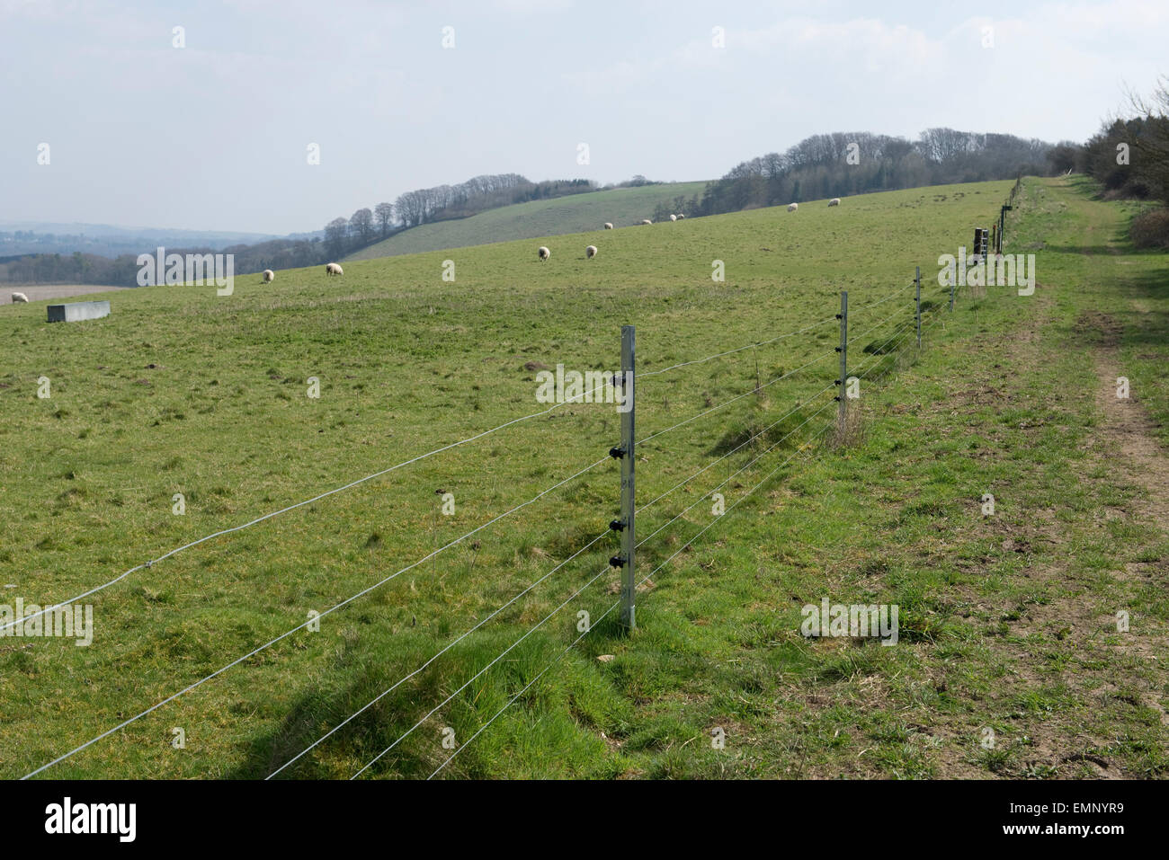 New electric fence with galvanised steep posts and insulators bording sheep sheep, Berkshire, April - Stock Image