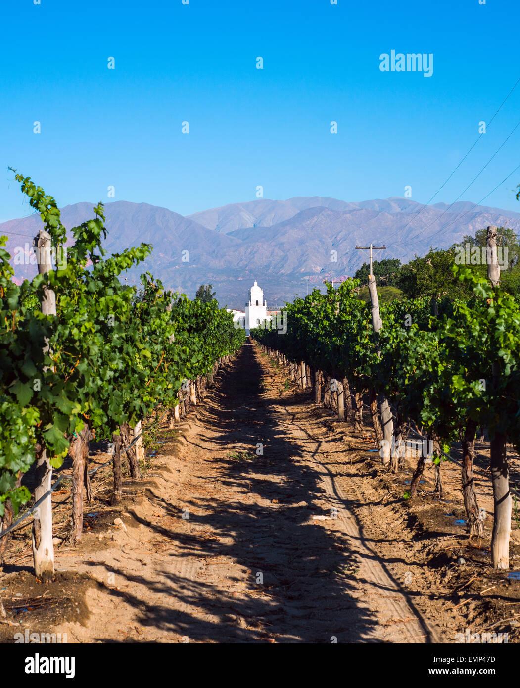 Vineyards in Cafayate, Argentina - Stock Image