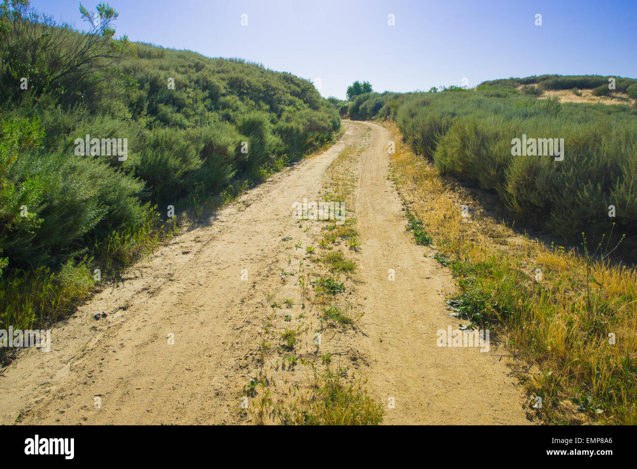Flattened dirt track winds through shrubbery in California wilderness. Stock Photo