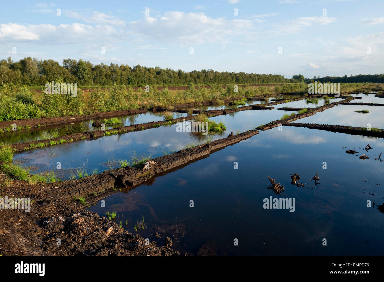 Excavated moorland prepared for renaturation, Great Moor nature reserve, Lower Saxony, Germany - Stock Image