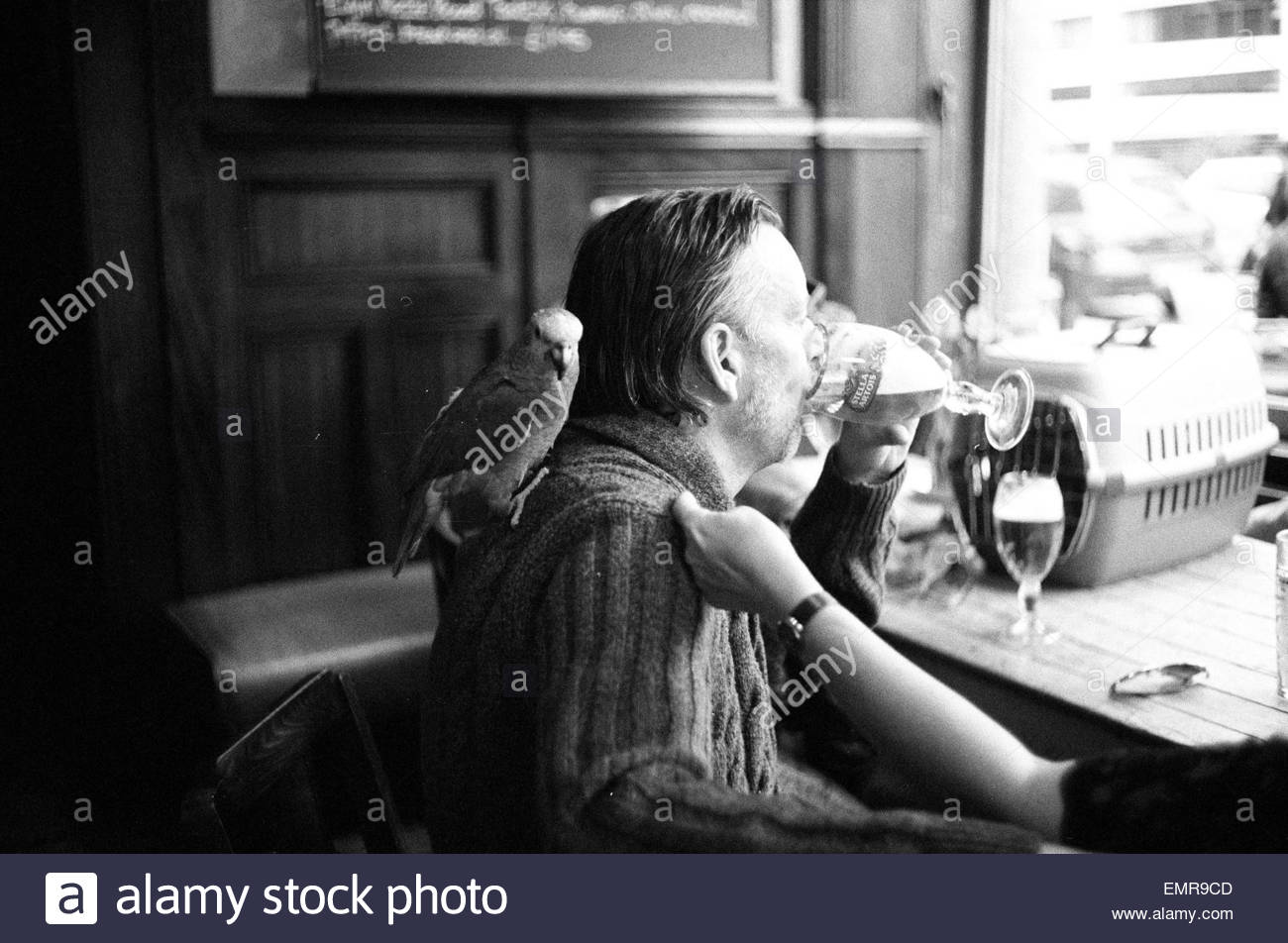 A man drinks a beer with a parrot on his shoulder in the Elgin Pub Ladbroke Grove, Notting Hill, London W11 - Stock Image