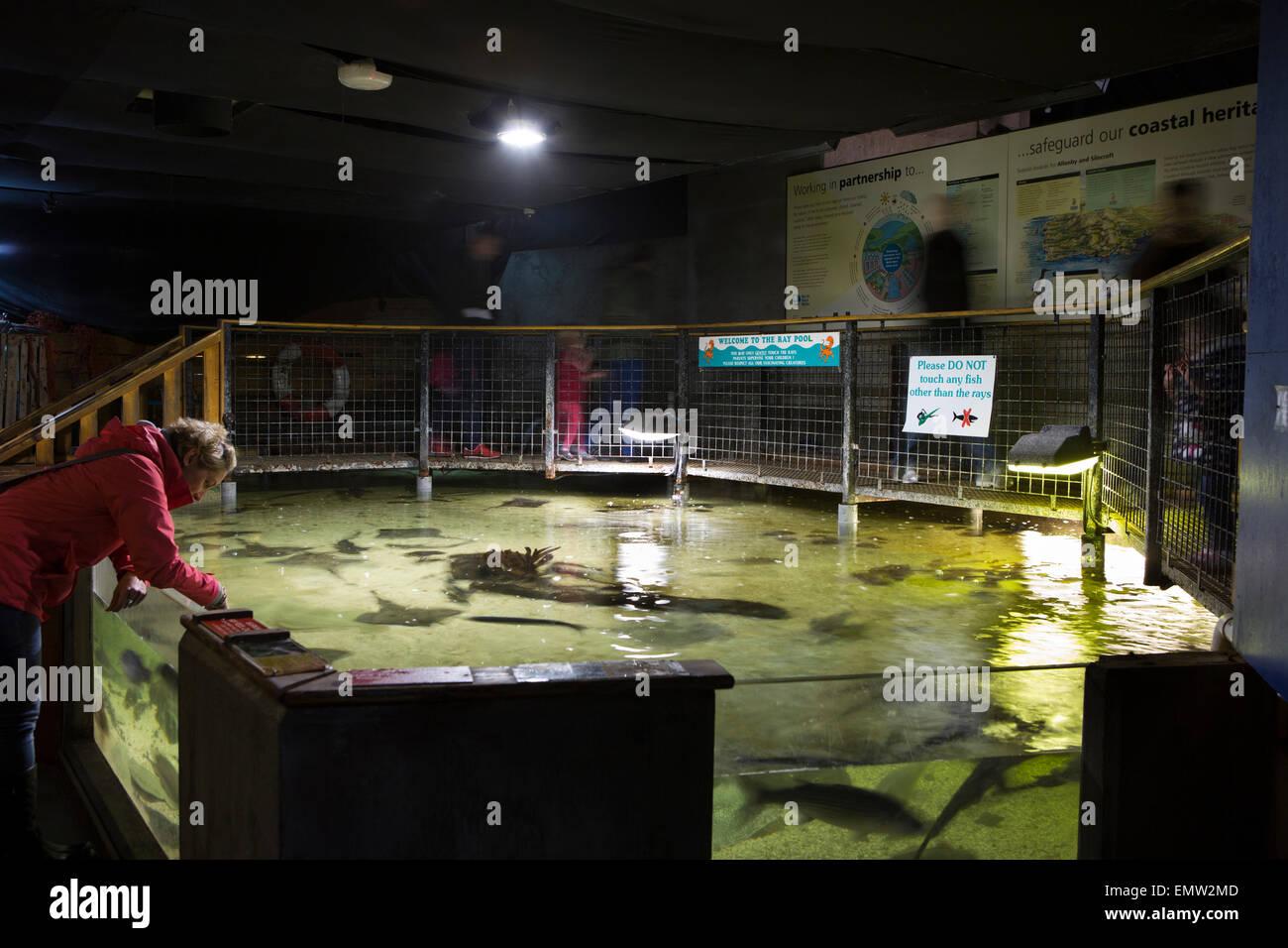 UK, Cumbria, Maryport, Coast Aquarium, child-friendly ray tank - Stock Image