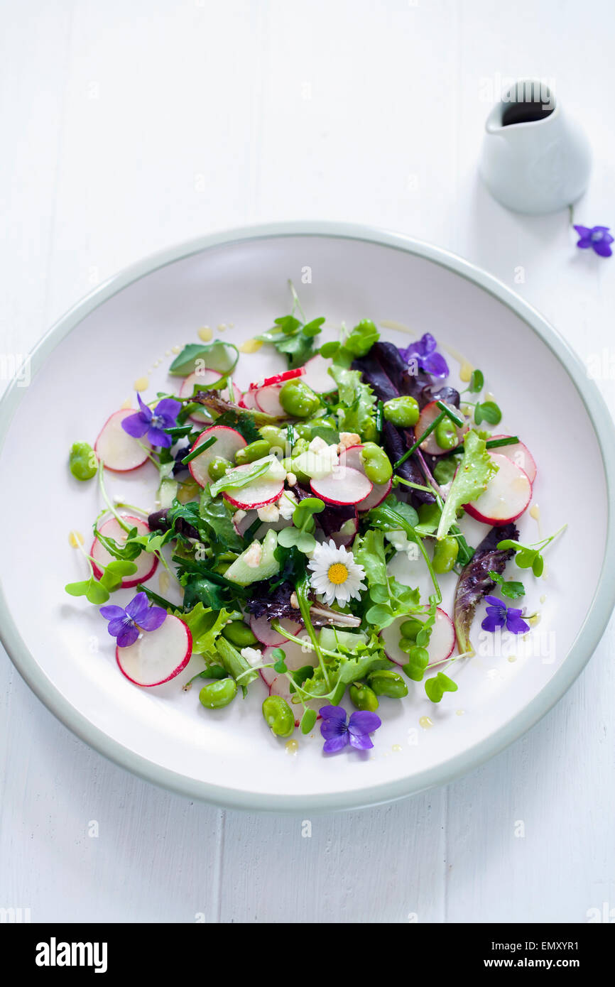Spring salad with radish, broad beans and violets Stock Photo