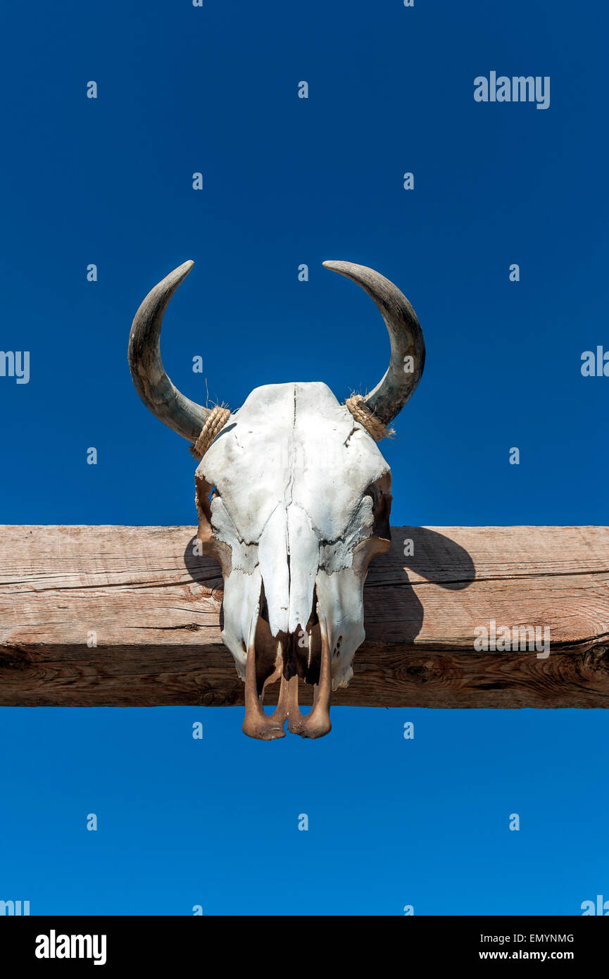 Cow Head Gate High Resolution Stock Photography And Images Alamy