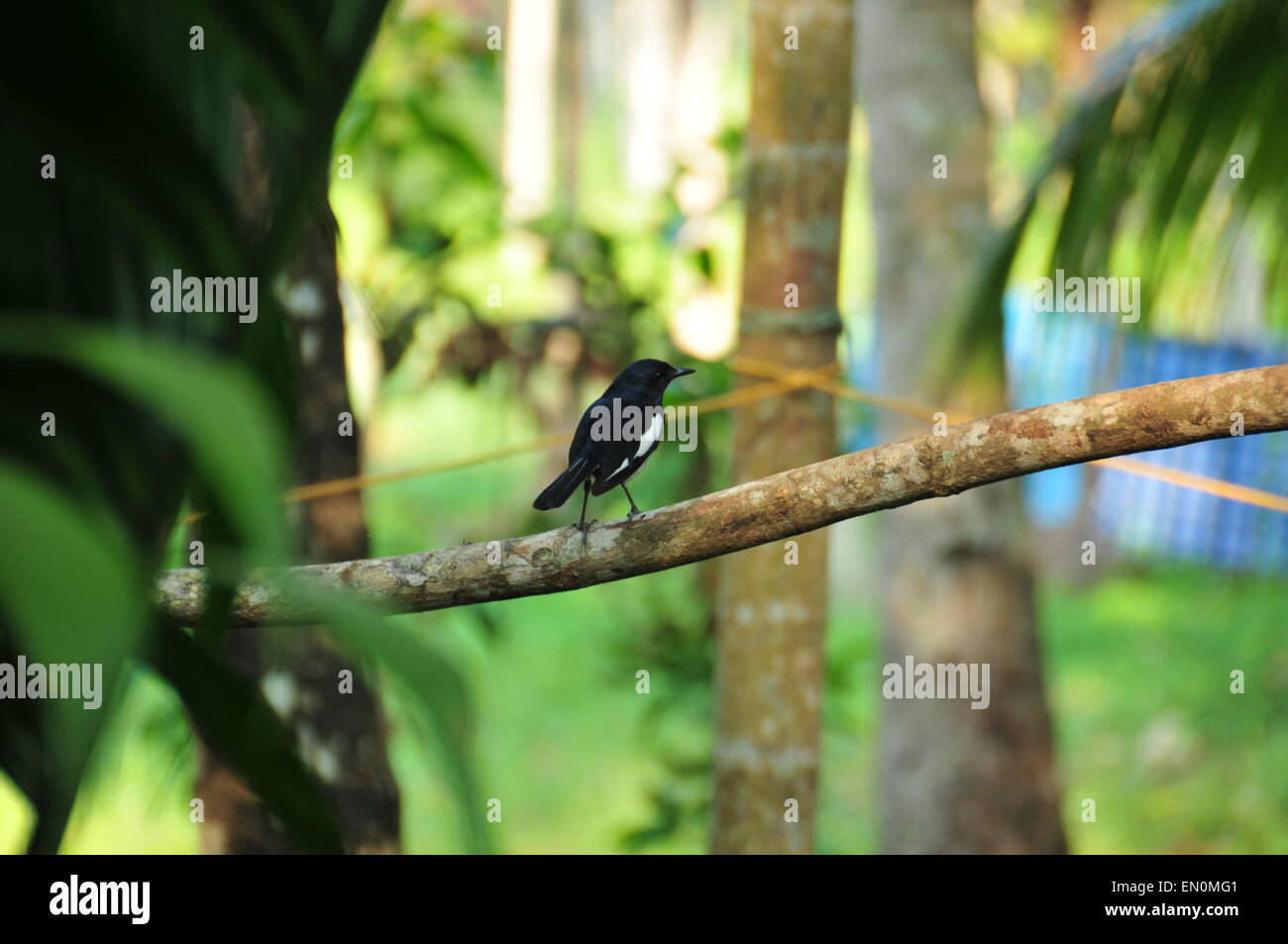 A small black bird sitting on a branch. - Stock Image