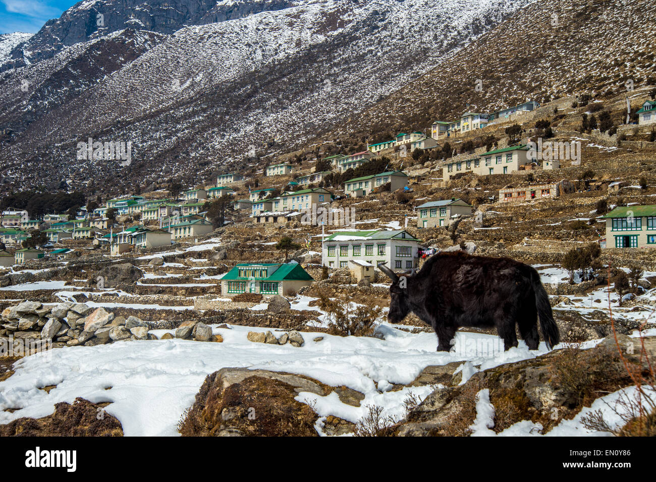 Khumjung village in Nepal with a yak in the foreground - Stock Image