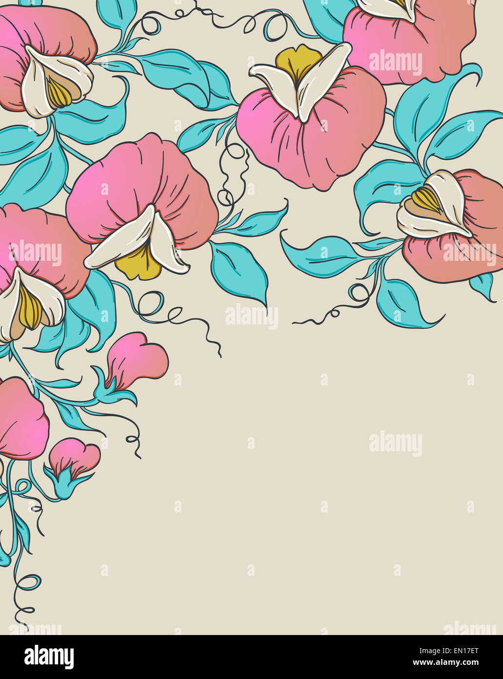 Floral background with pink sweet pea - Stock Image