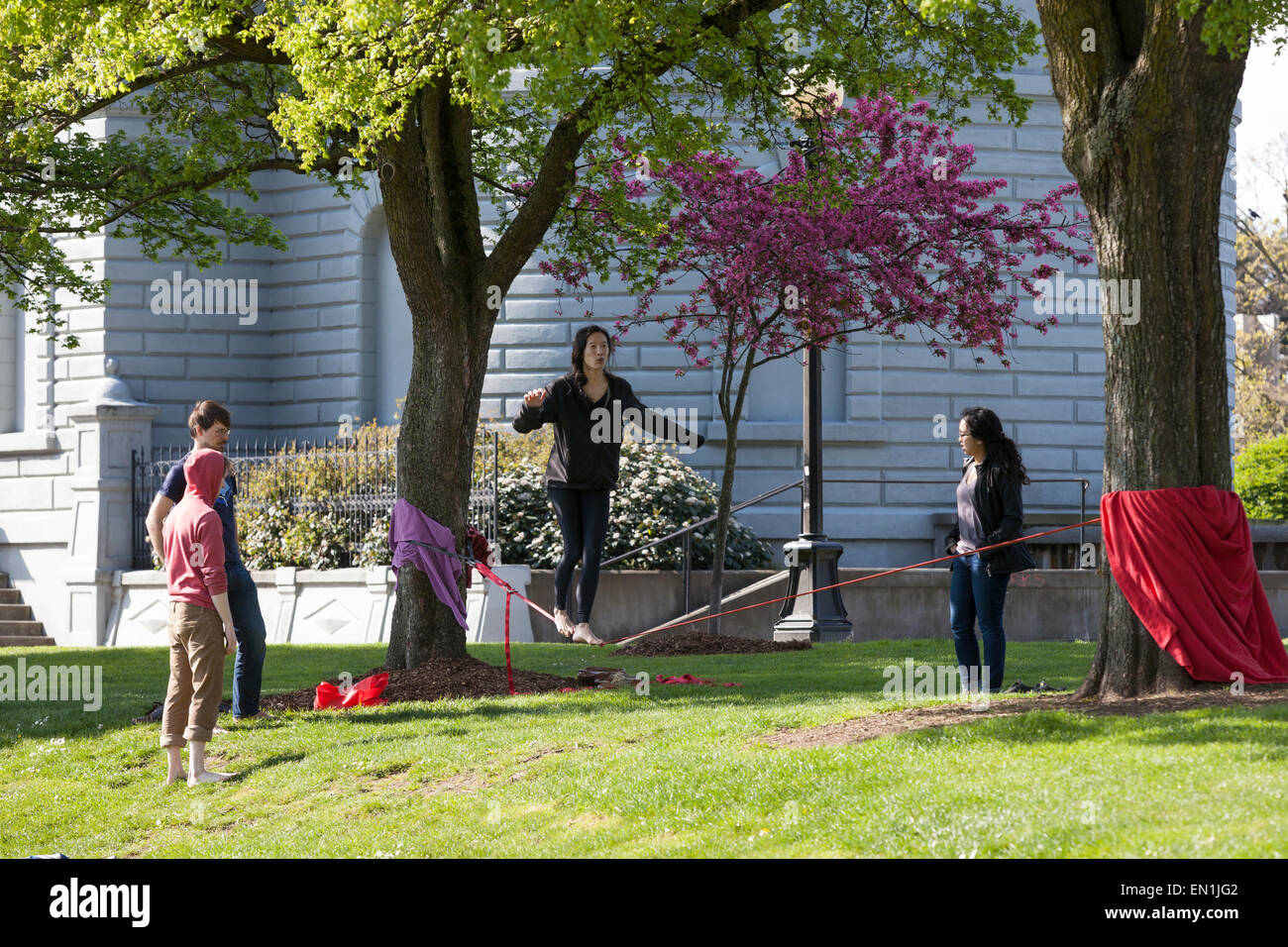 Group of friends slacklining at Cal Anderson Park - Seattle, King County, Washington, USA - Stock Image