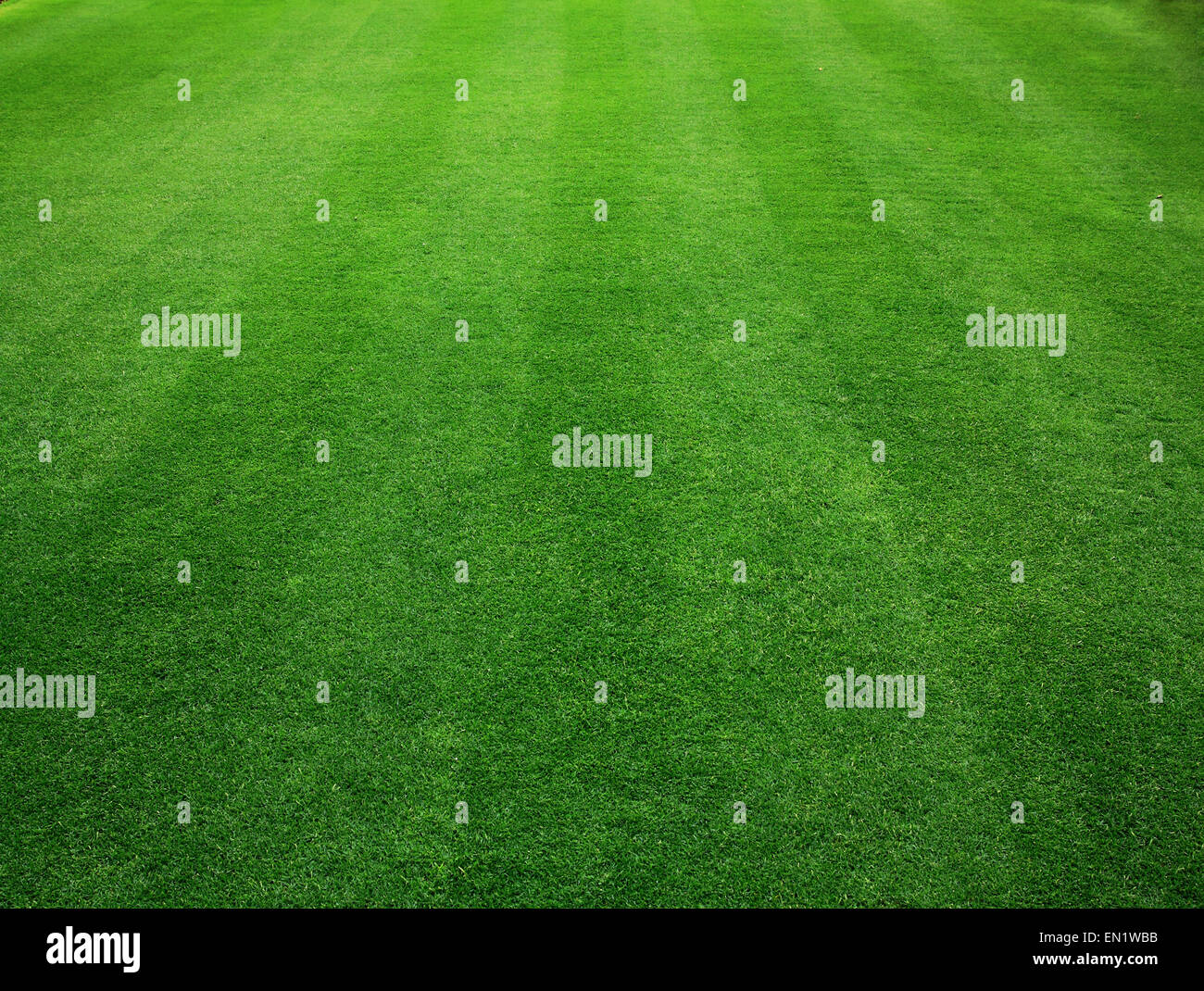 Golf green grass background texture pattern nature. - Stock Image