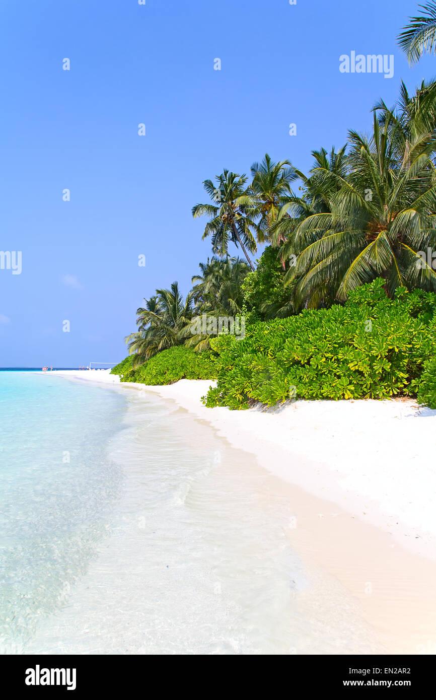 Maldivian island. Paradise in tropics. - Stock Image