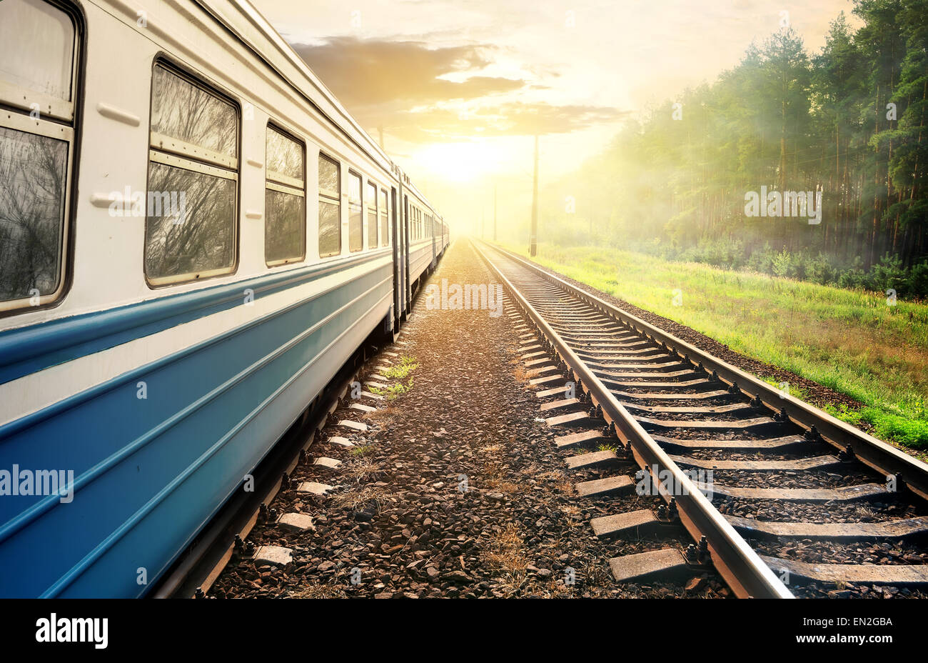 Train moving through the pine forest at sunset Stock Photo