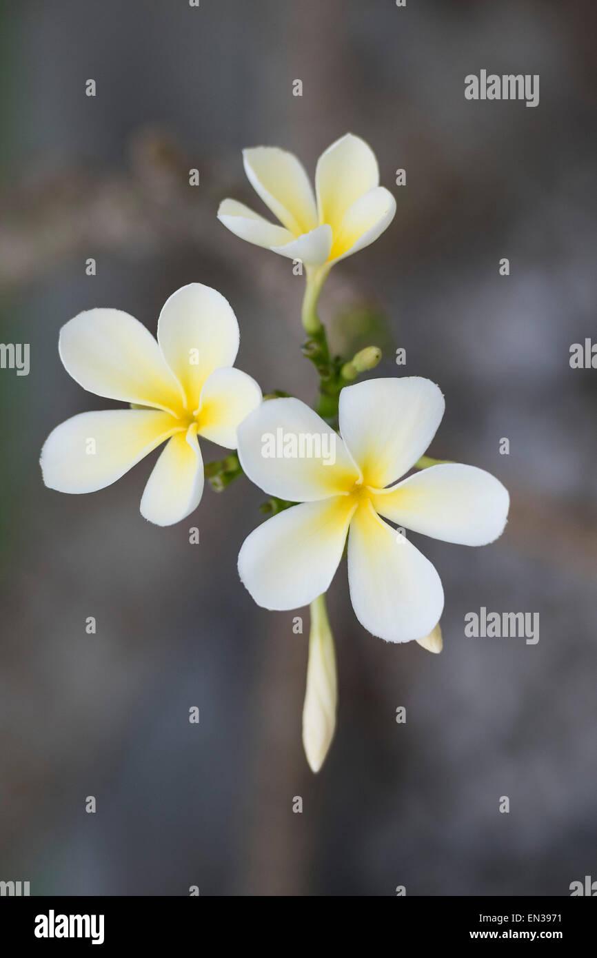 Flowers Kerala