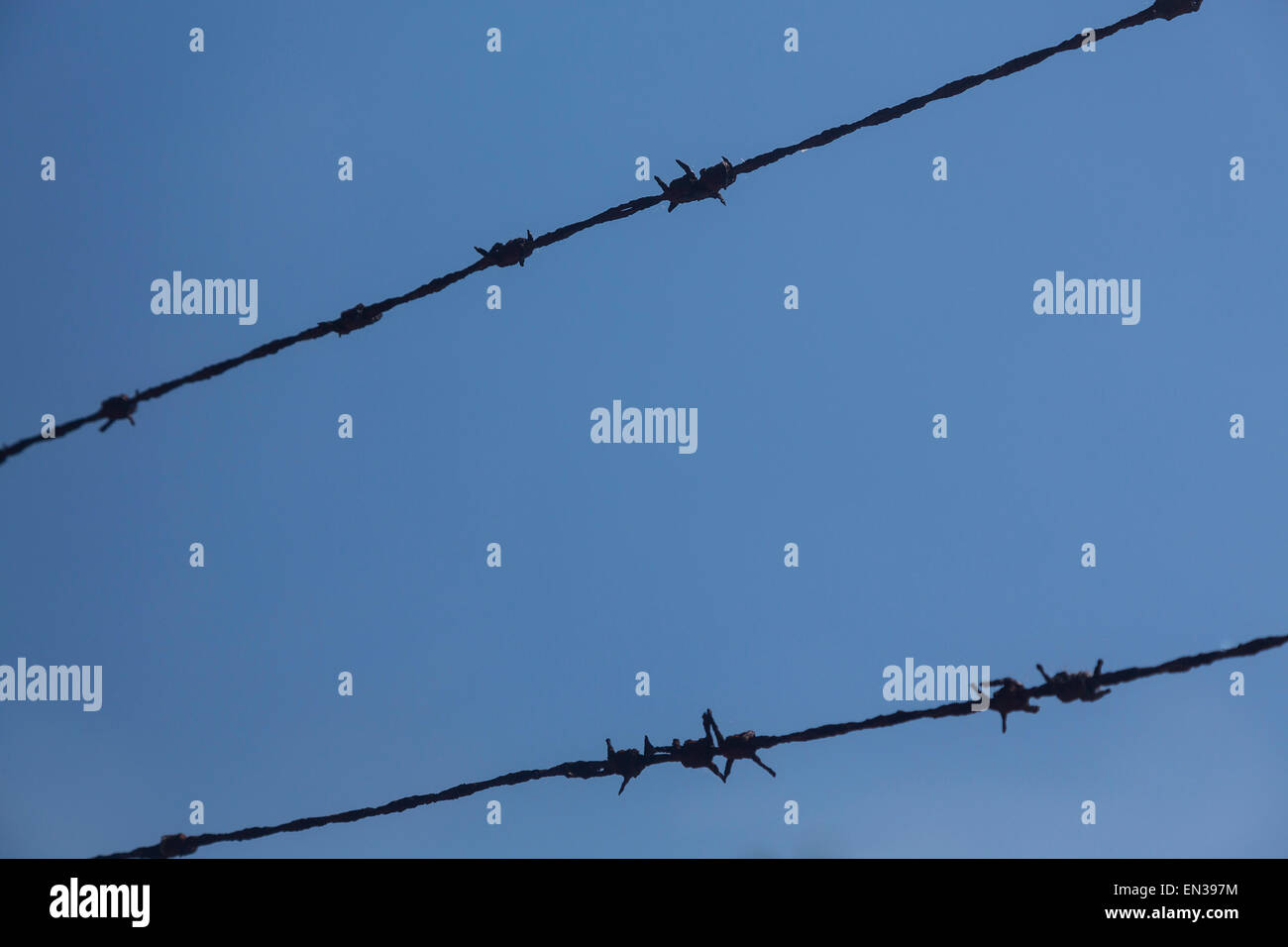 Barbed wire against blue sky, Germany Stock Photo
