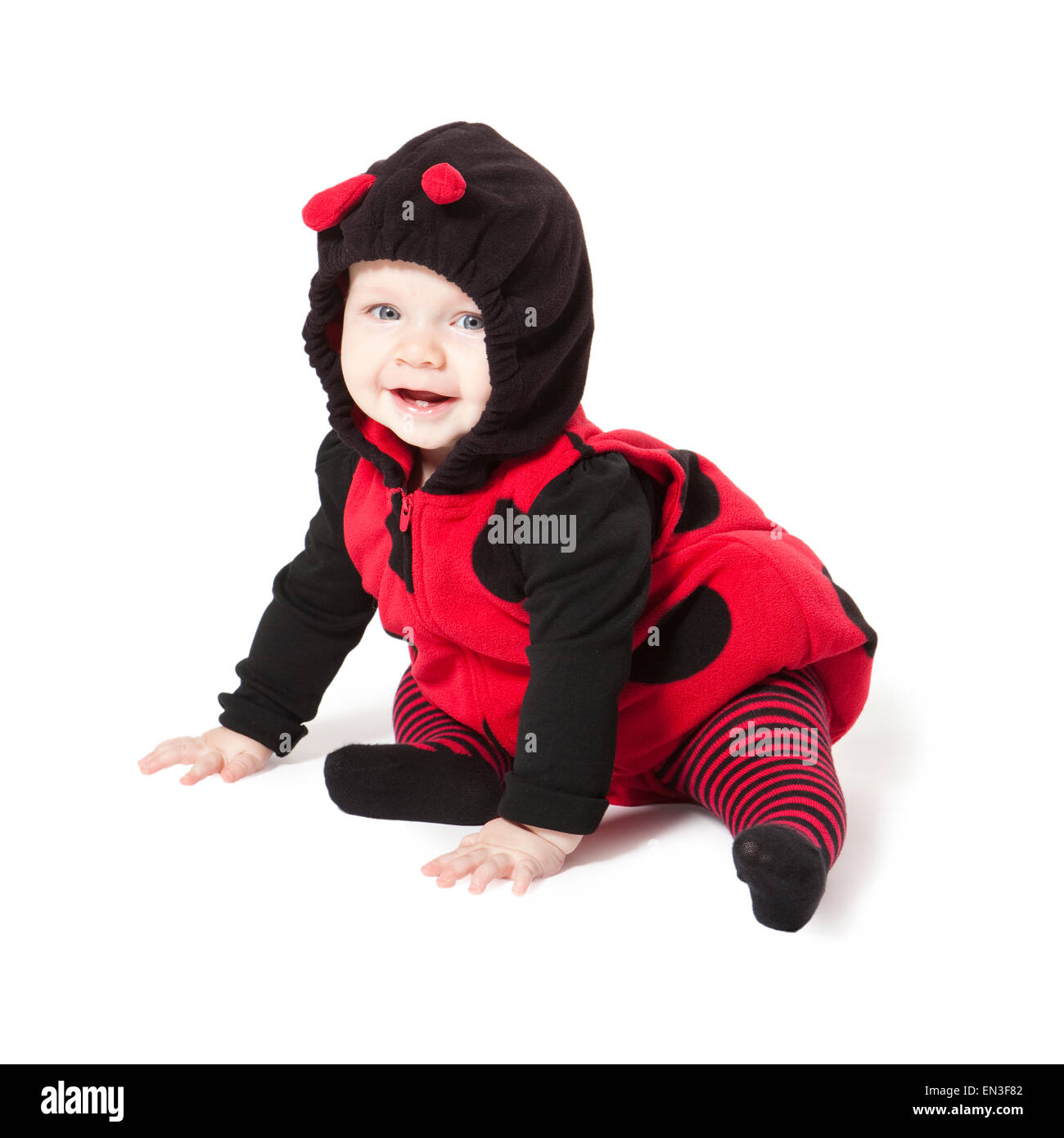 Portrait of baby girl (6-11 months) in ladybird costume for Halloween Stock Photo