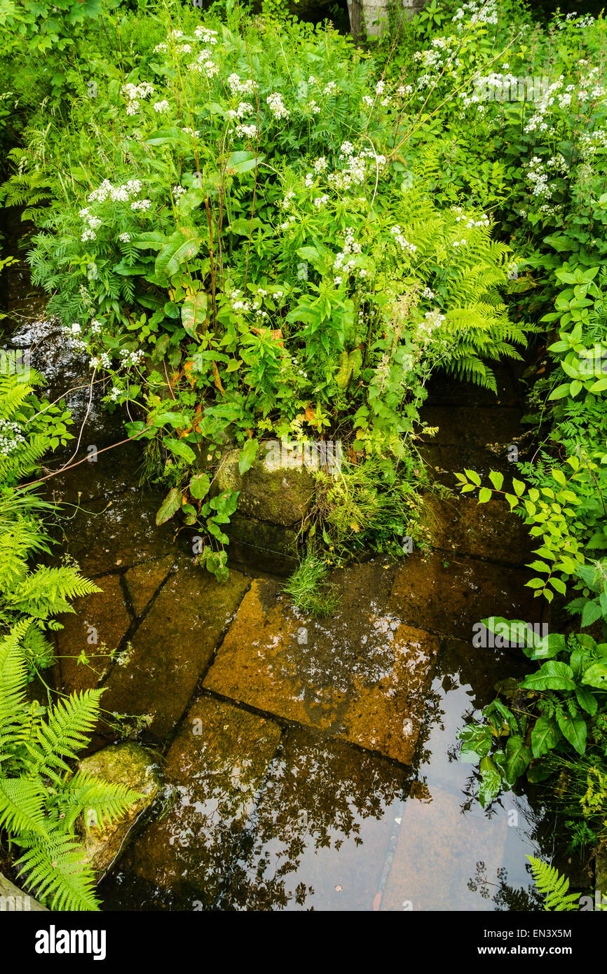 Wild plants surround a stream which has brown tiles on it's bottom. - Stock Image