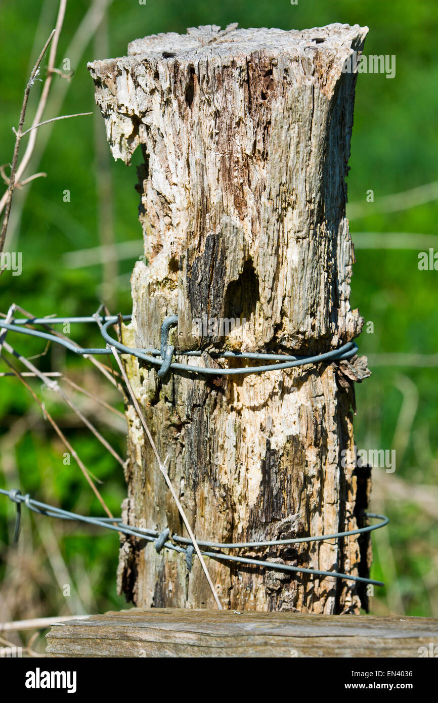 Old fence post wooden - Stock Image